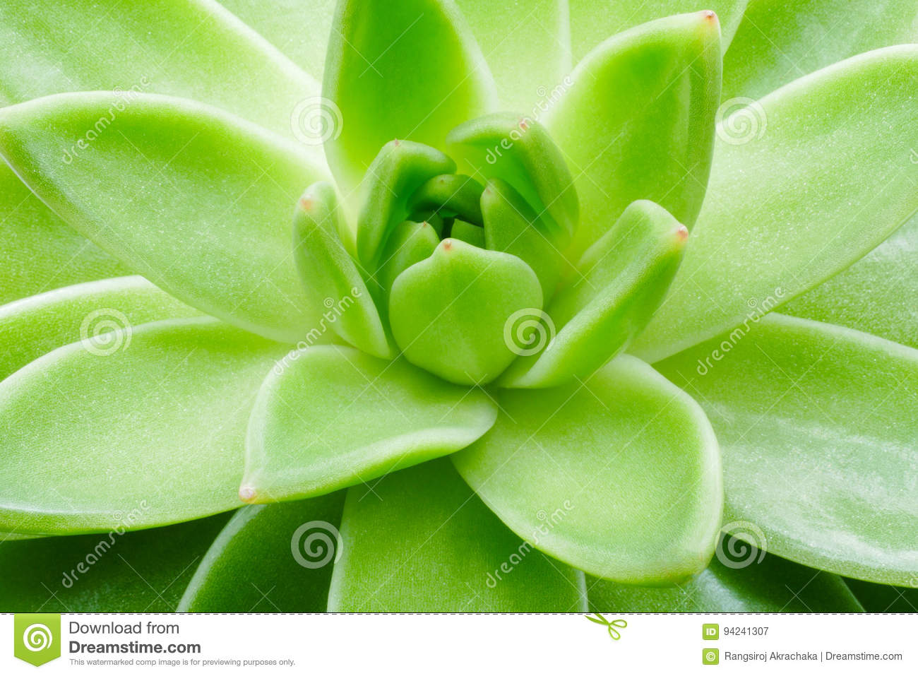Green succulent plant macro close up background.