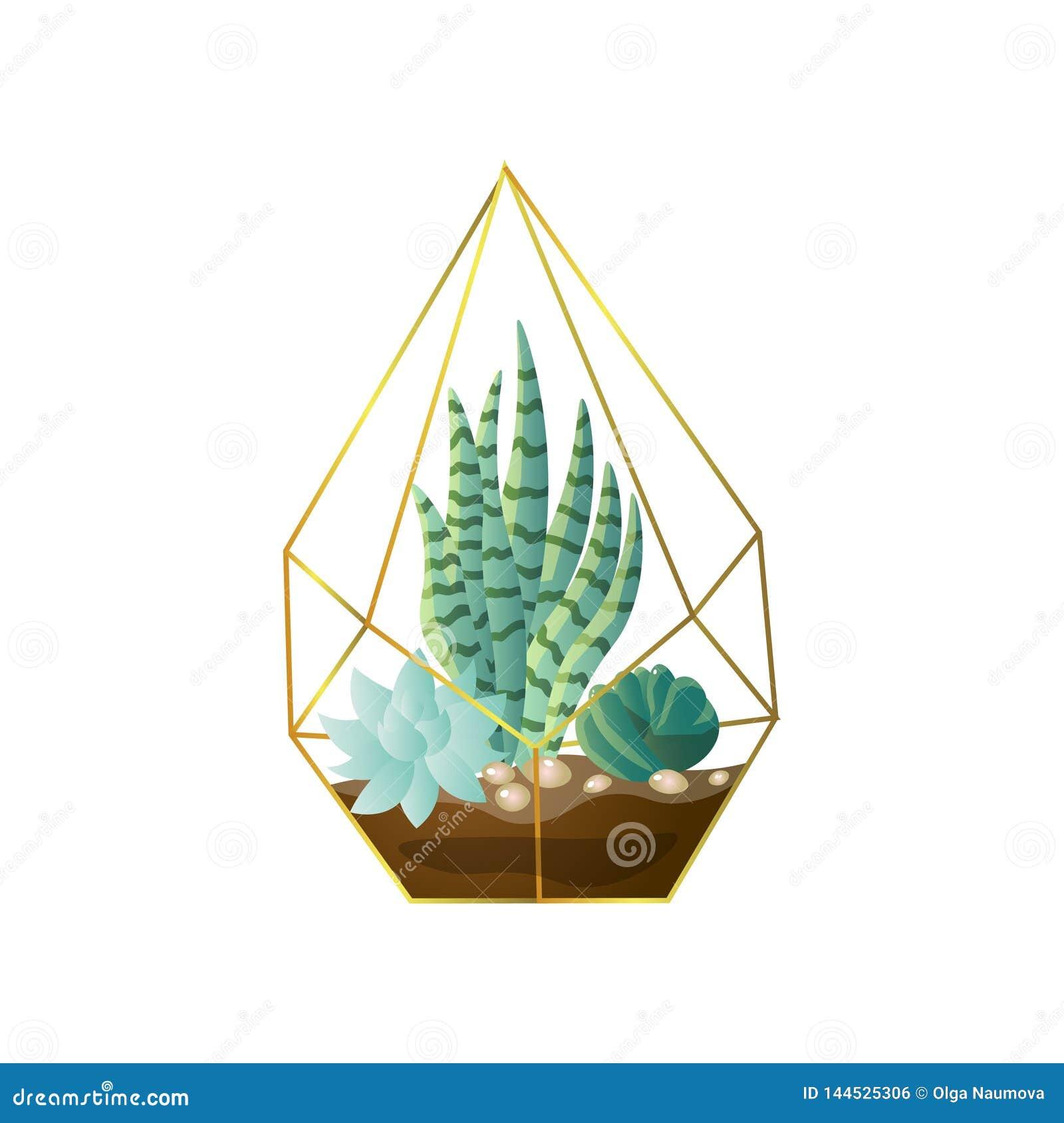 Green Succulent Plant Pot In Geometric Gold Terrarium Stock Vector Illustration Of Brown Icon 144525306