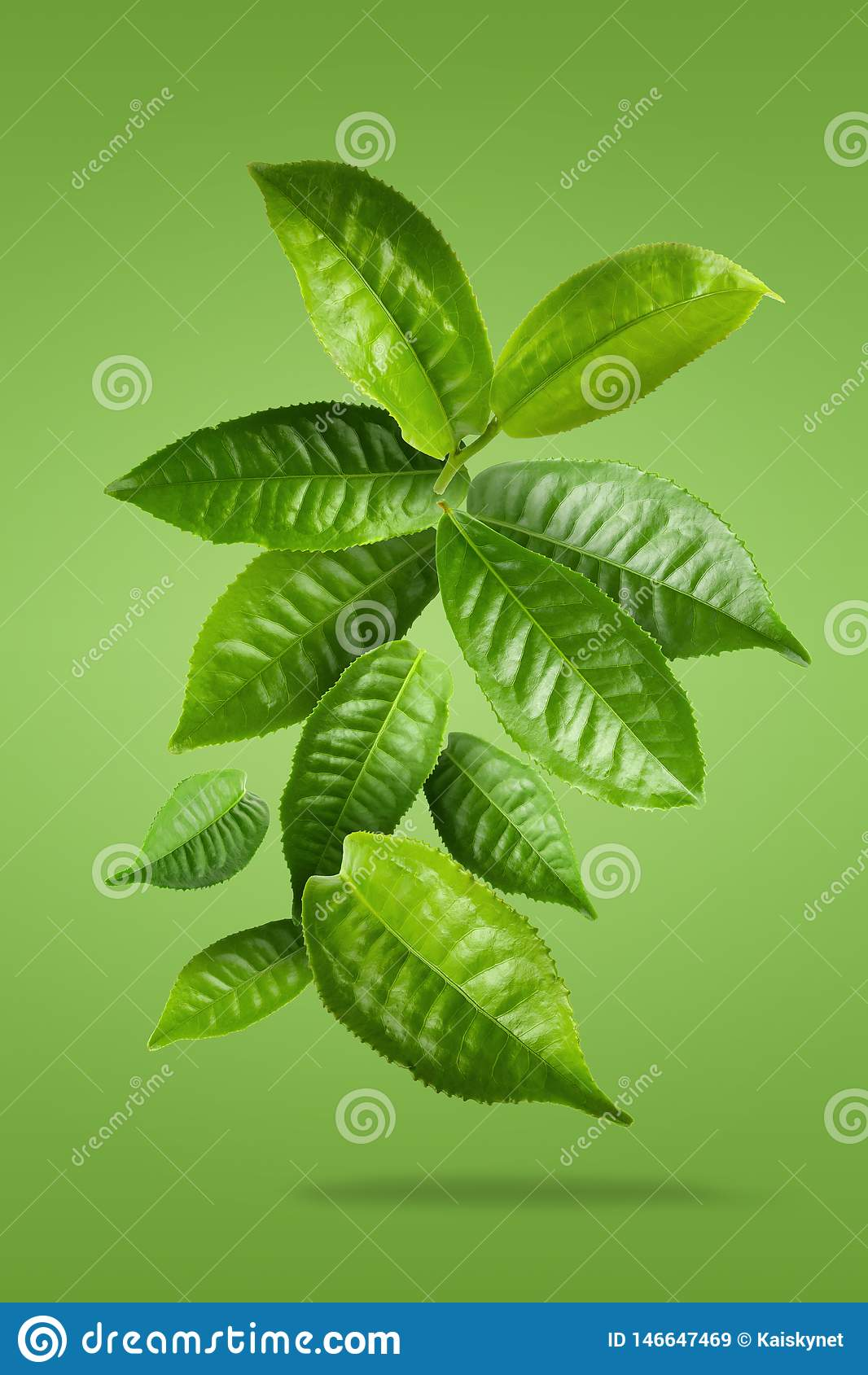 Green tea leaf isolated over Green background