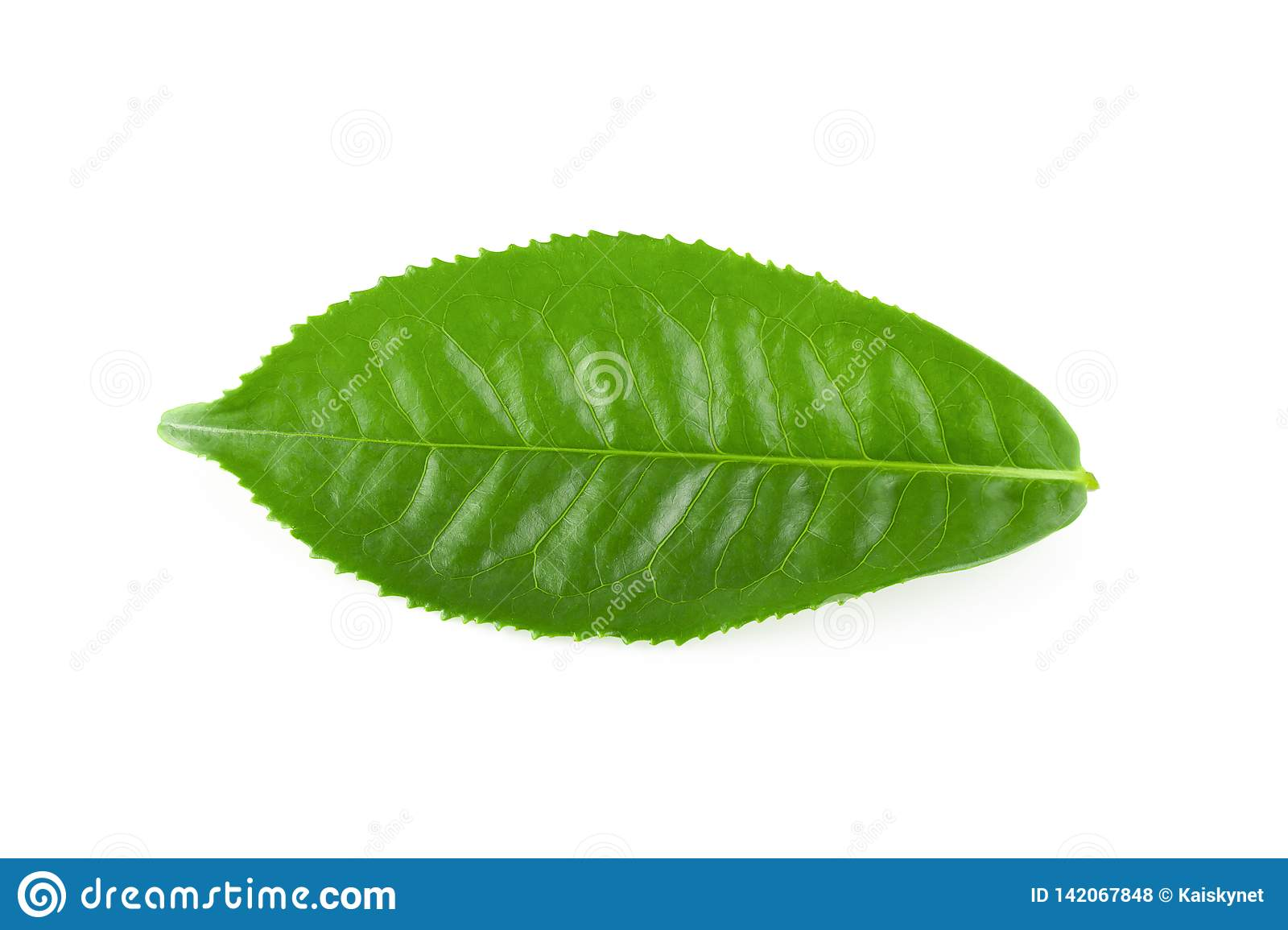 Green tea leaf isolated over white background