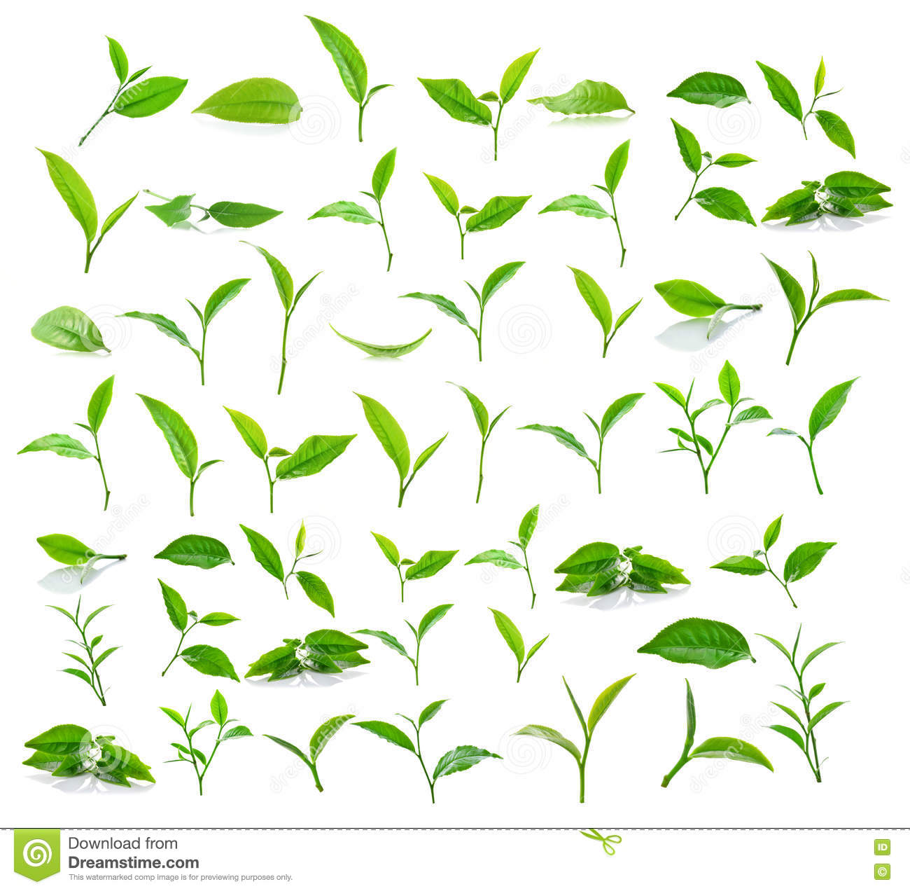 White Tea Background Royalty Free Stock Photography