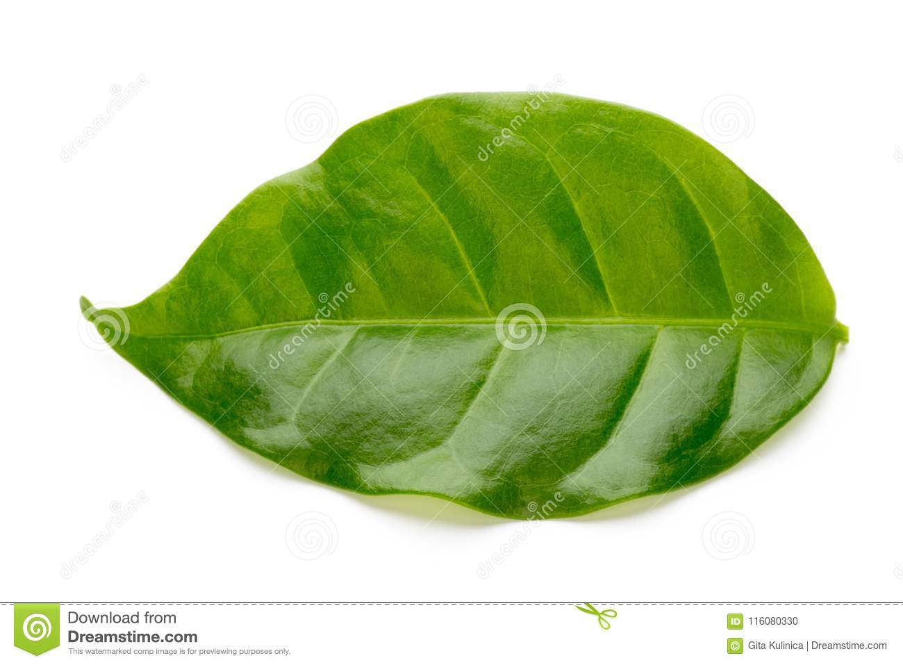 Green tea leaf isolated on white background.