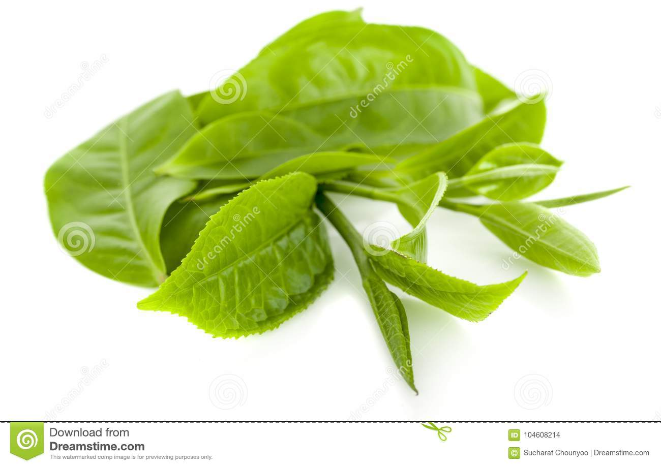 Green tea leaf an isolated on white background