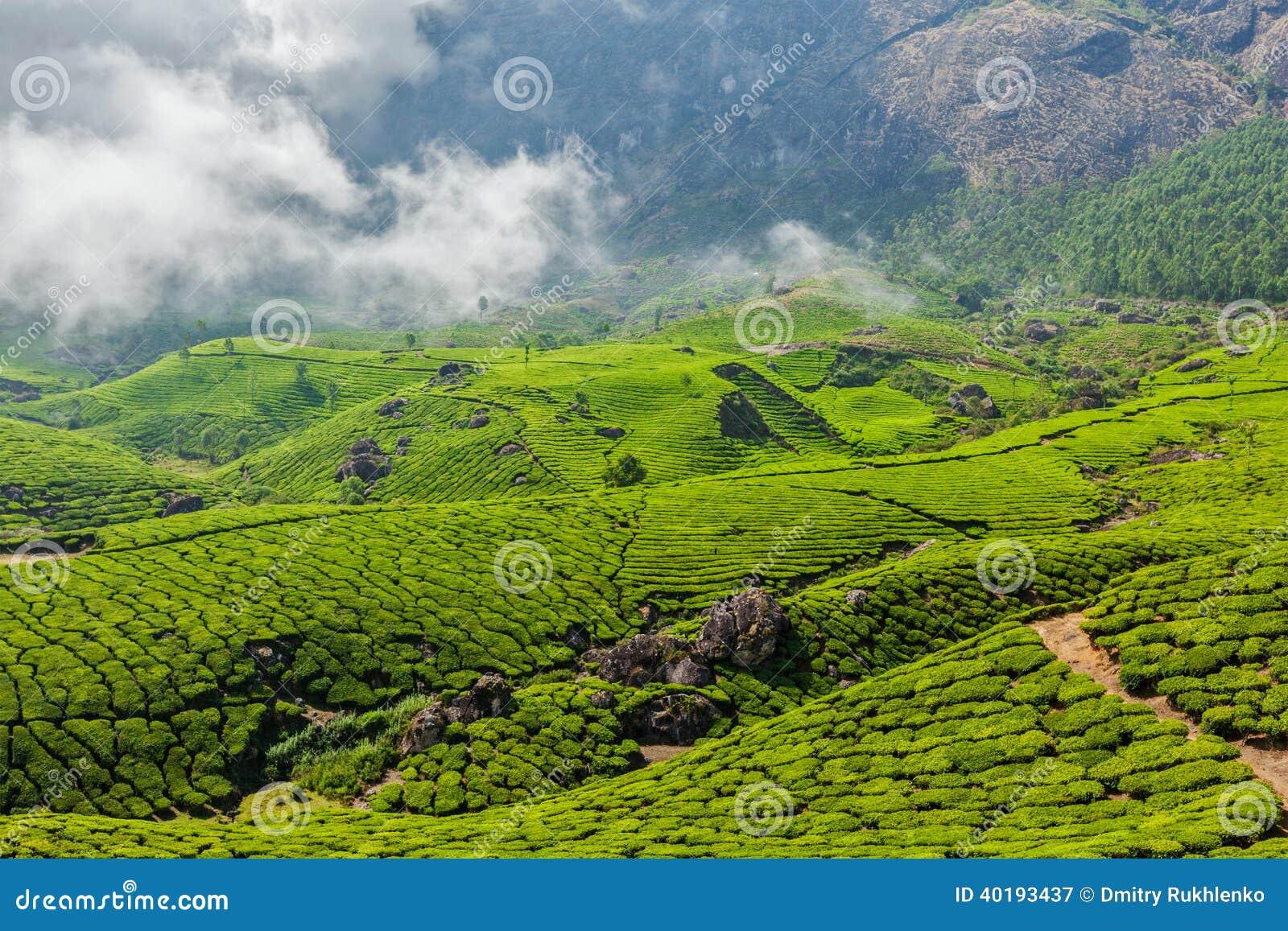 Green Tea Plantations In Munnar, Kerala, India Stock Photo ...