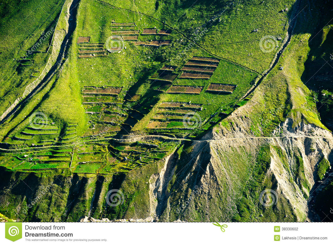 Green terrace texture of himalaya mountains india stock for Terrace on the green