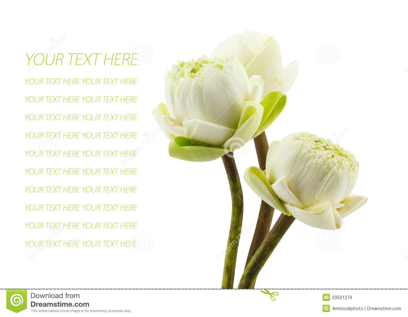 Green three lotus flowers blossom isolated on white background stock green three lotus flowers blossom isolated on white background mightylinksfo Images