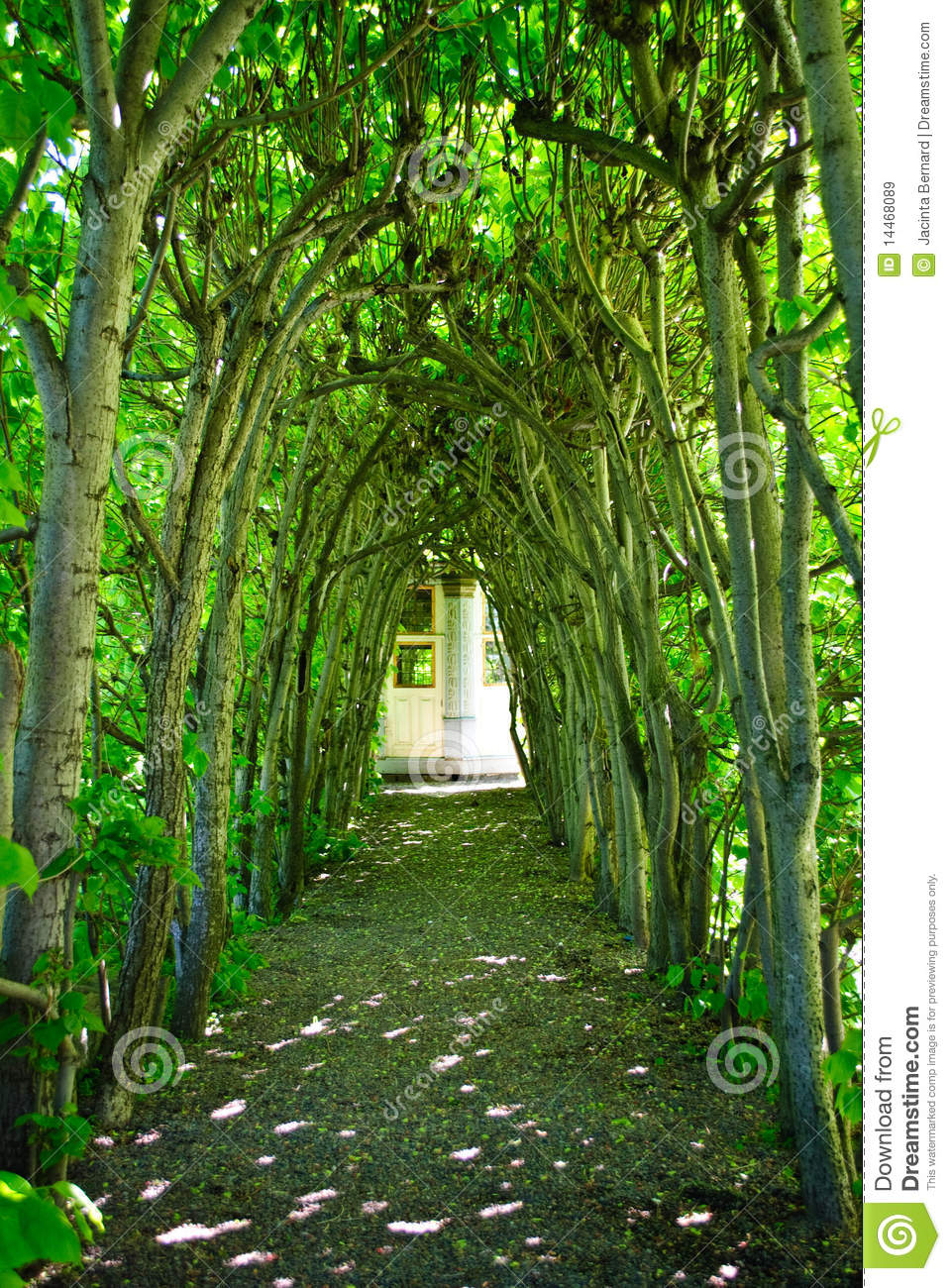 Green Tree Archway Stock Image Image Of Walkway Green