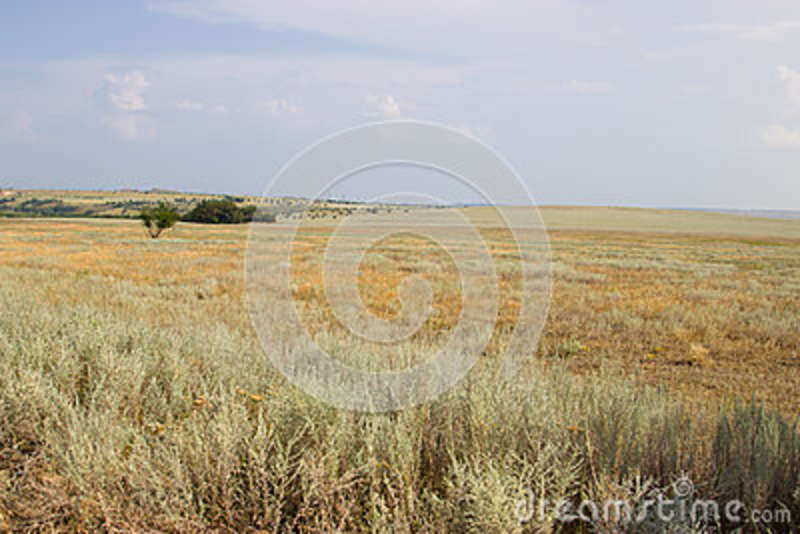 Green tree on a background of yellow steppe.