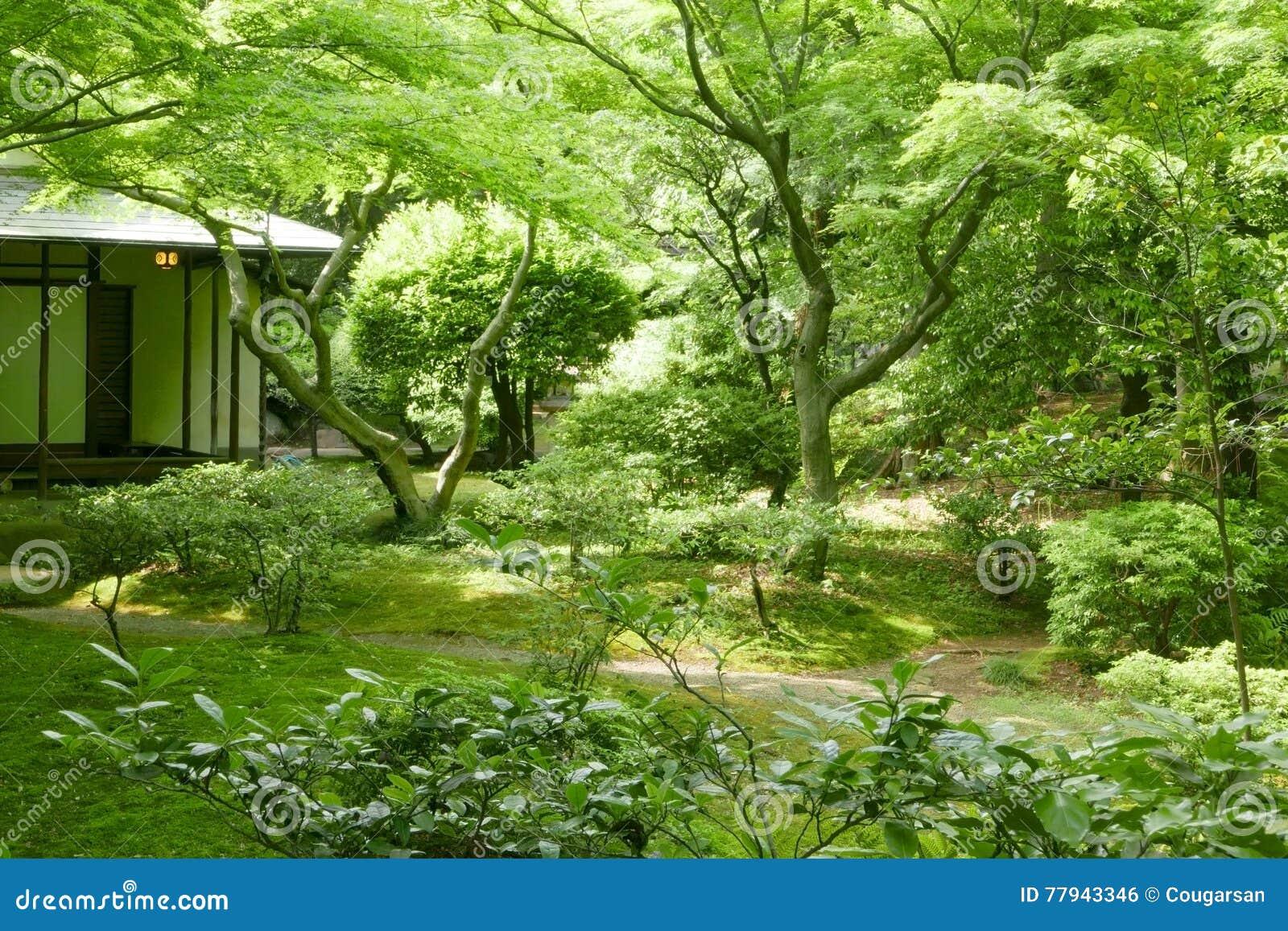 green tree backyard and traditional japanese house stock photo