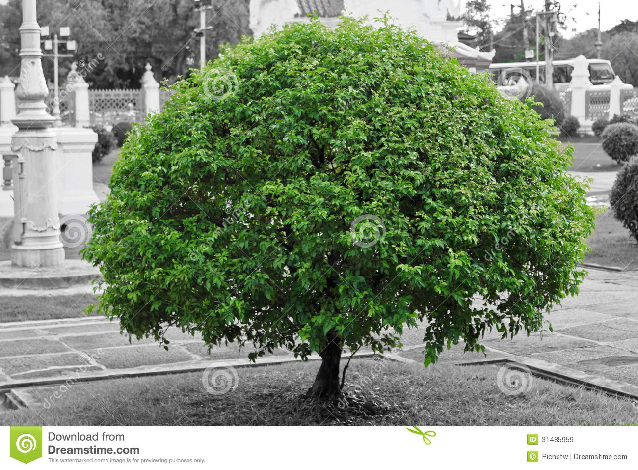 Black And White Photography With Color Splash Nature Green Tree