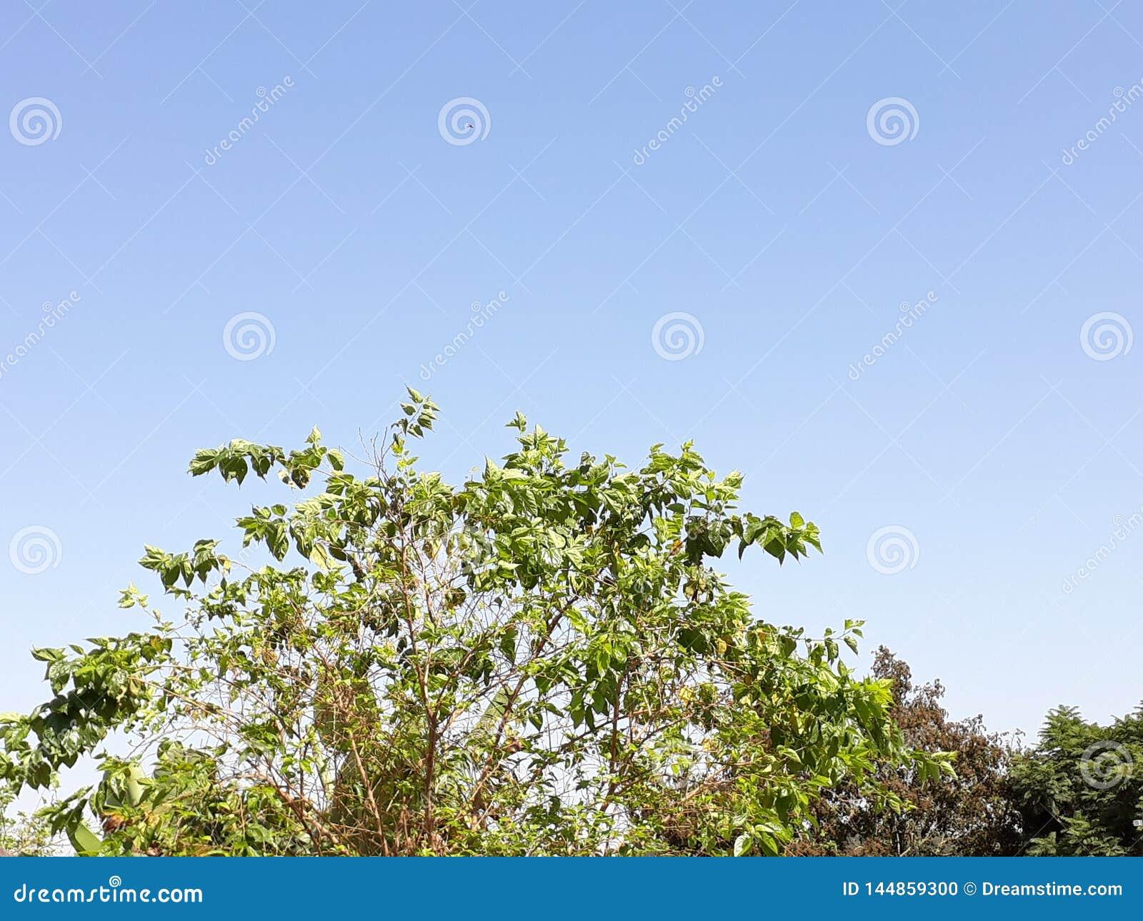 Green tree in a blue sky
