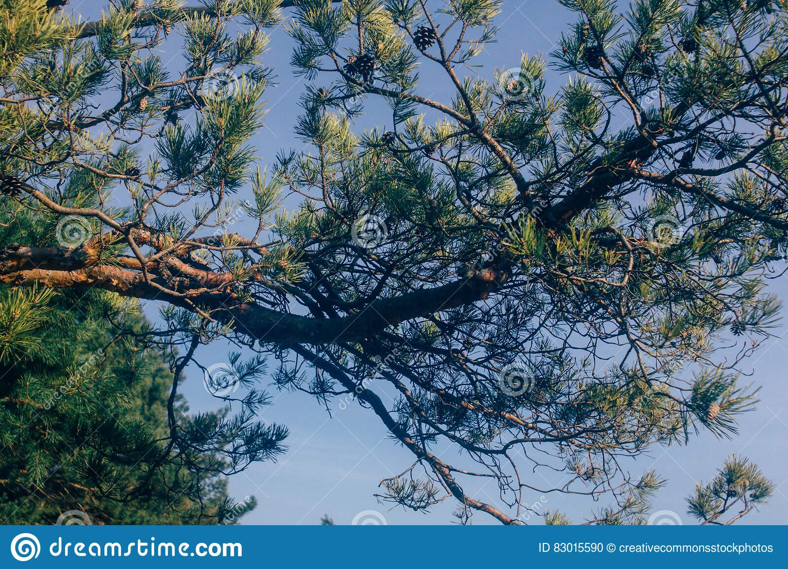 Download Green Tree during Daytime stock photo. Image of branches - 83015590