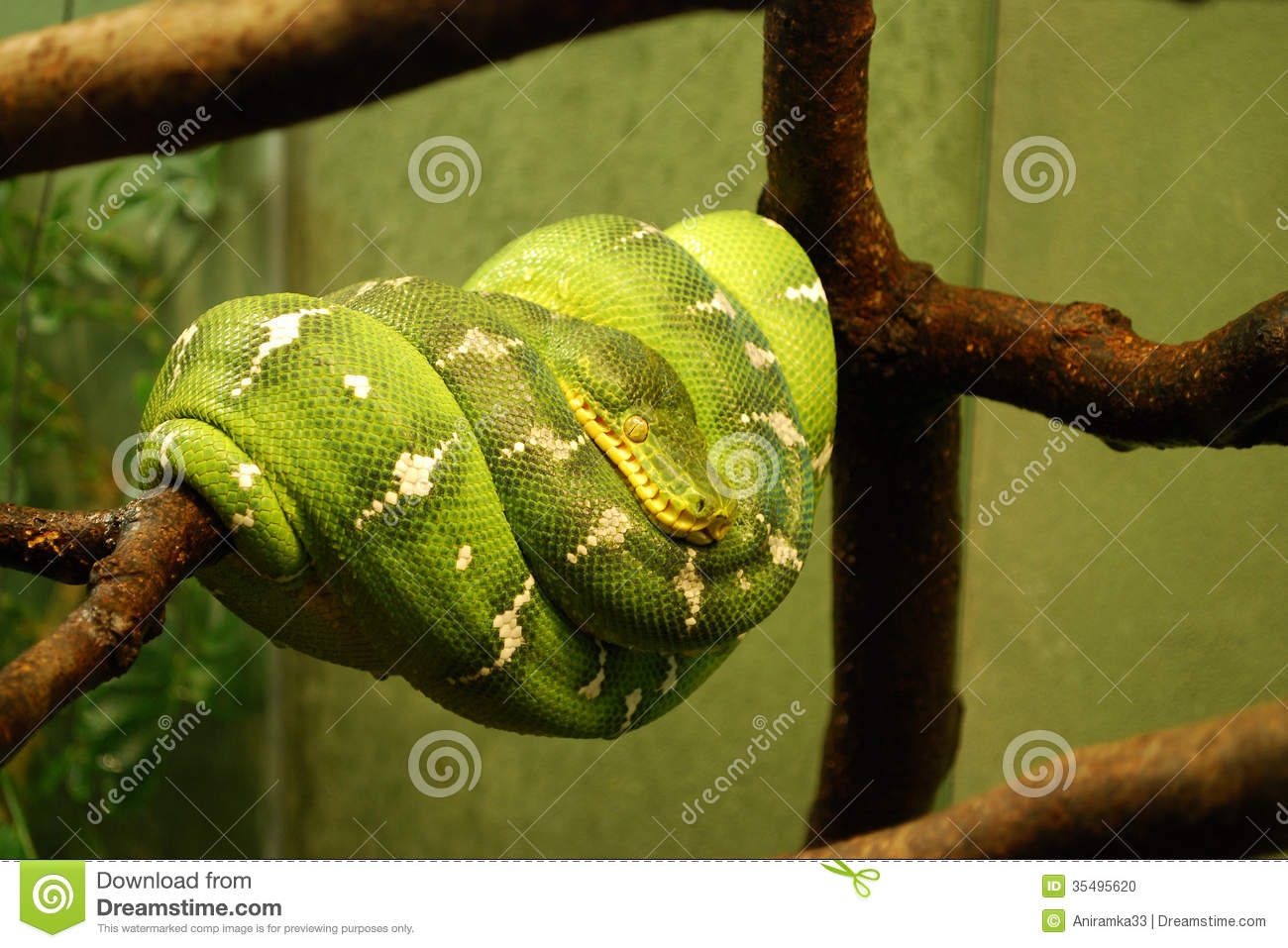 Python date from string in Australia