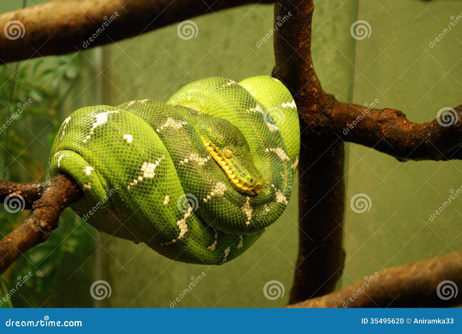Python parse date in Australia