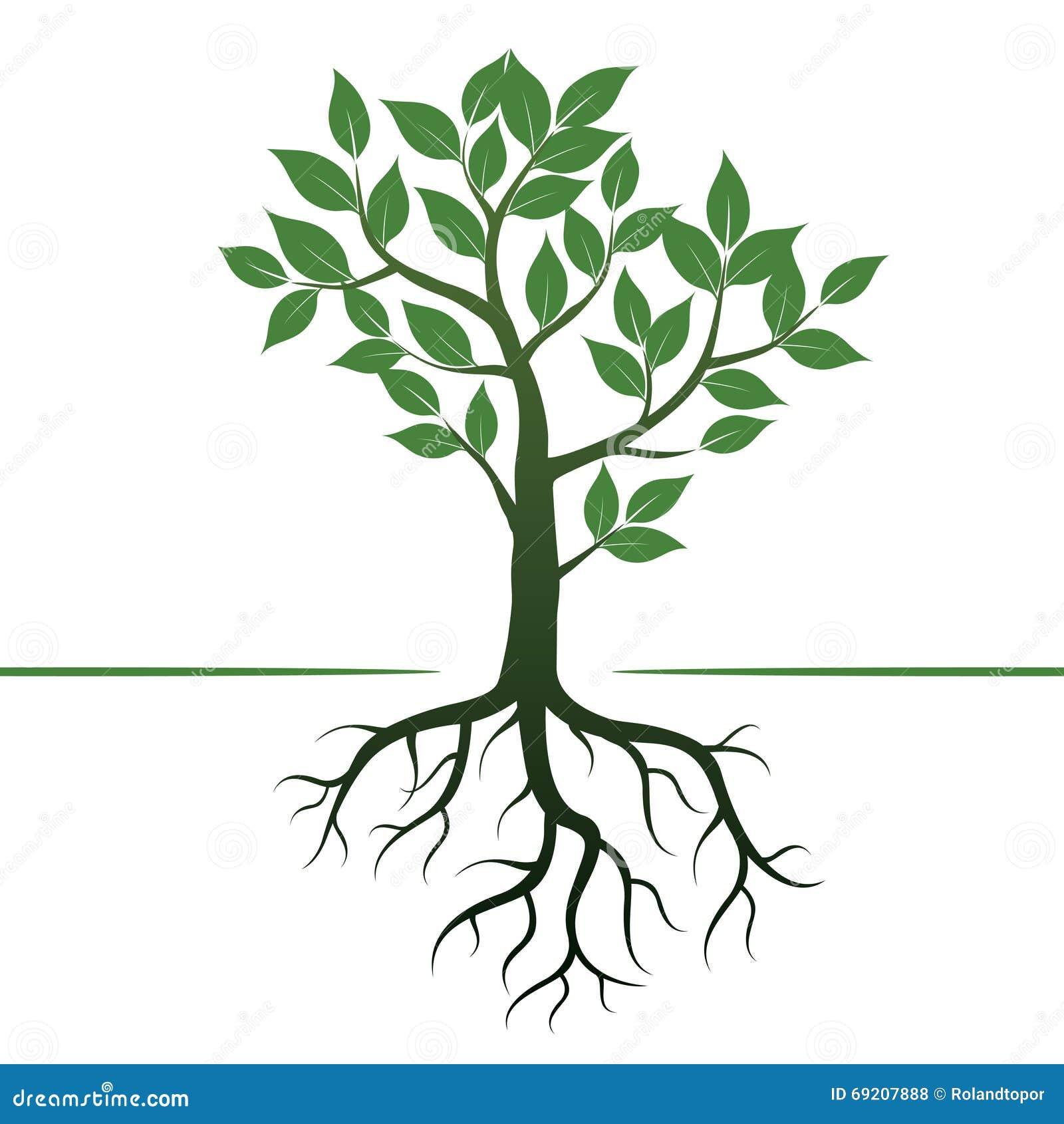 Vector Illustration Tree: Green Tree And Roots. Vector Illustration. Stock