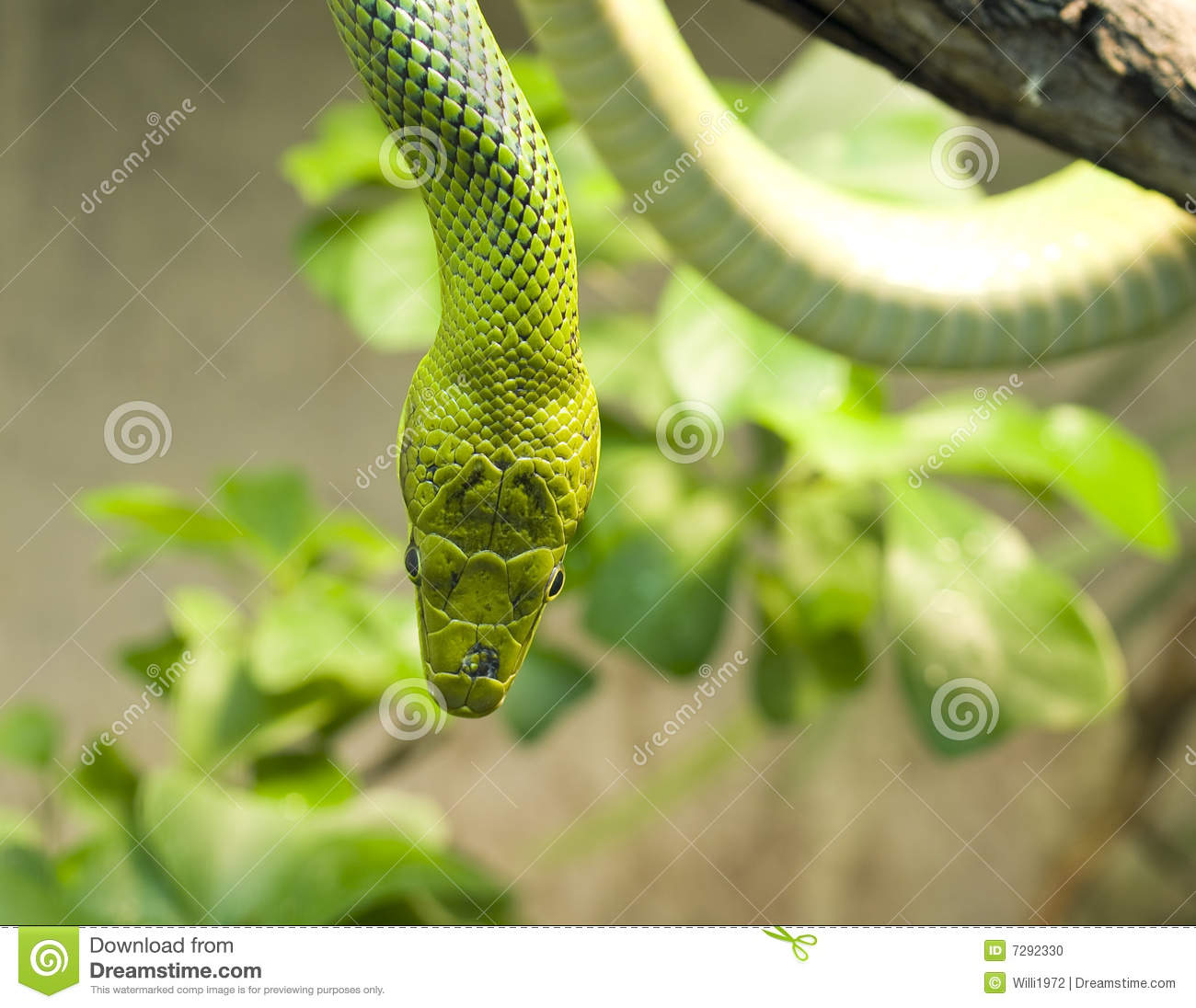 green snakes branches snake - photo #19