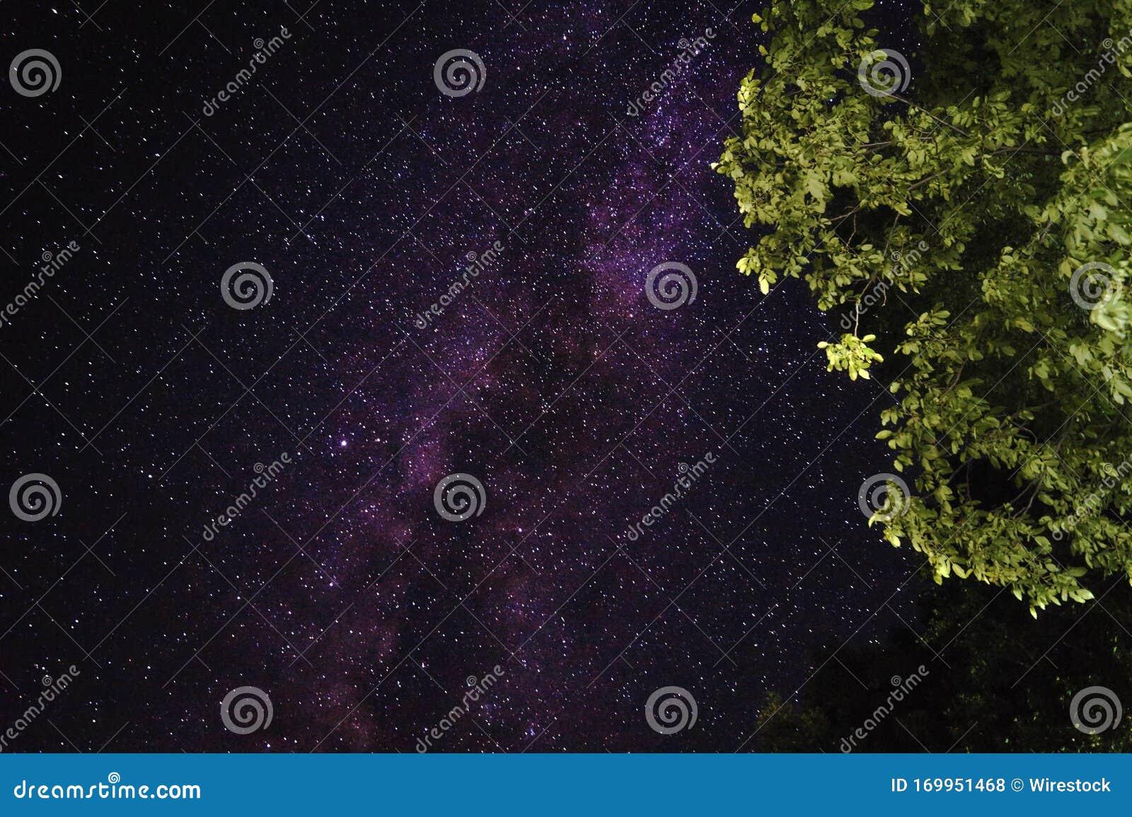 Green Tree And The Velvet Sky Full Of Stars In The Background