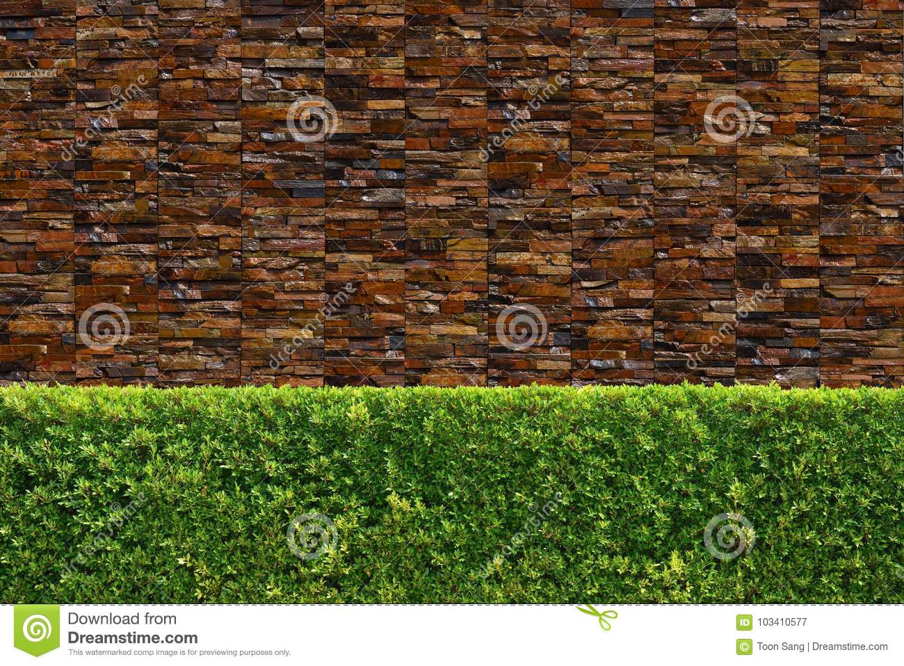 Green Tree Wall Fence Texture Stock Image - Image of decorative ...