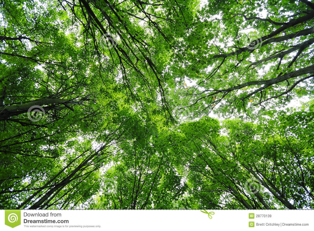Green trees canopy stock image image of trees canopy for Canopy of trees