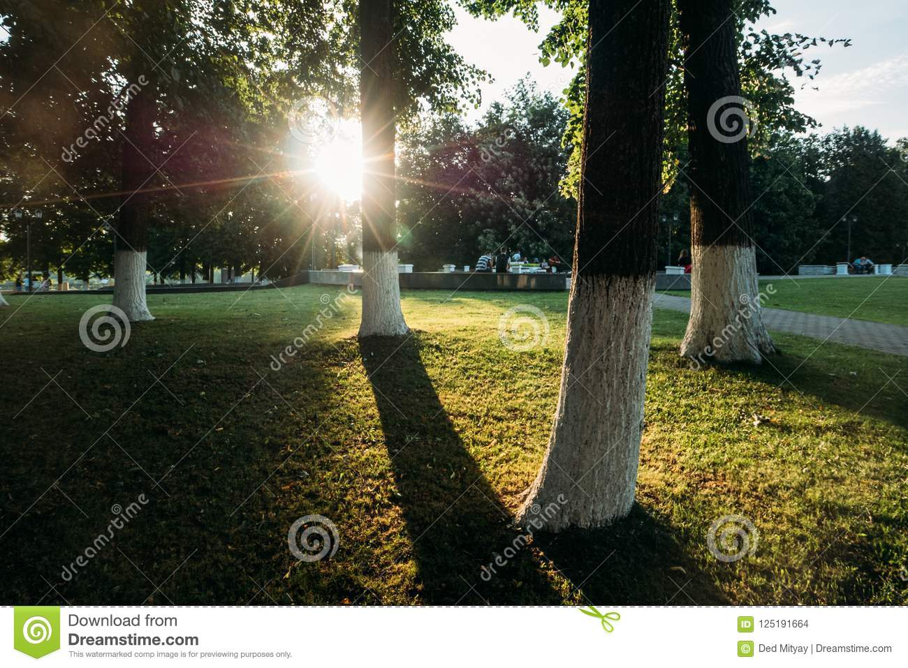 Green trees and grass in public city park and sunlight of sunset sun