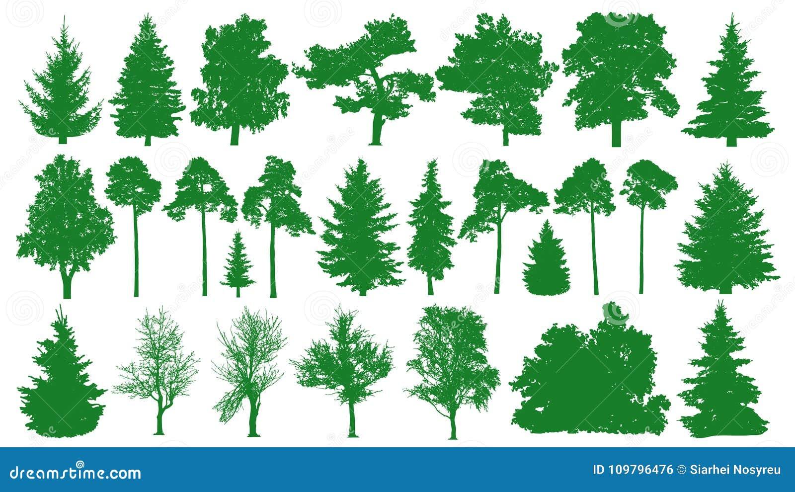 Green trees set. White background. Silhouette of a coniferous forest. Fir-tree, fir, pine, birch, oak, bush, branch.