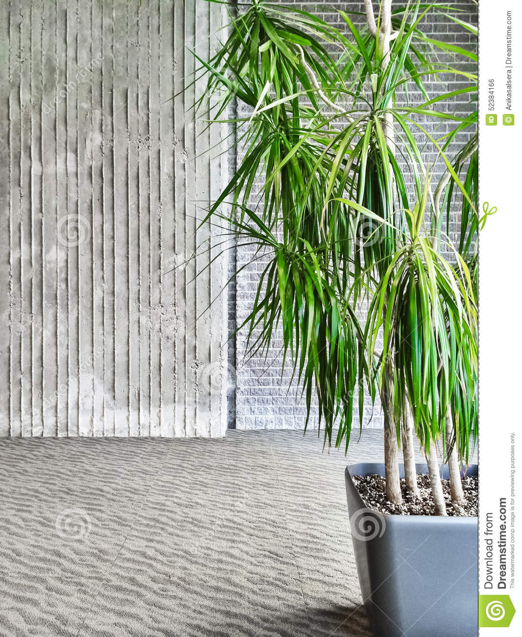 Green tropical plant in a gray room stock photo image for Green floor plant