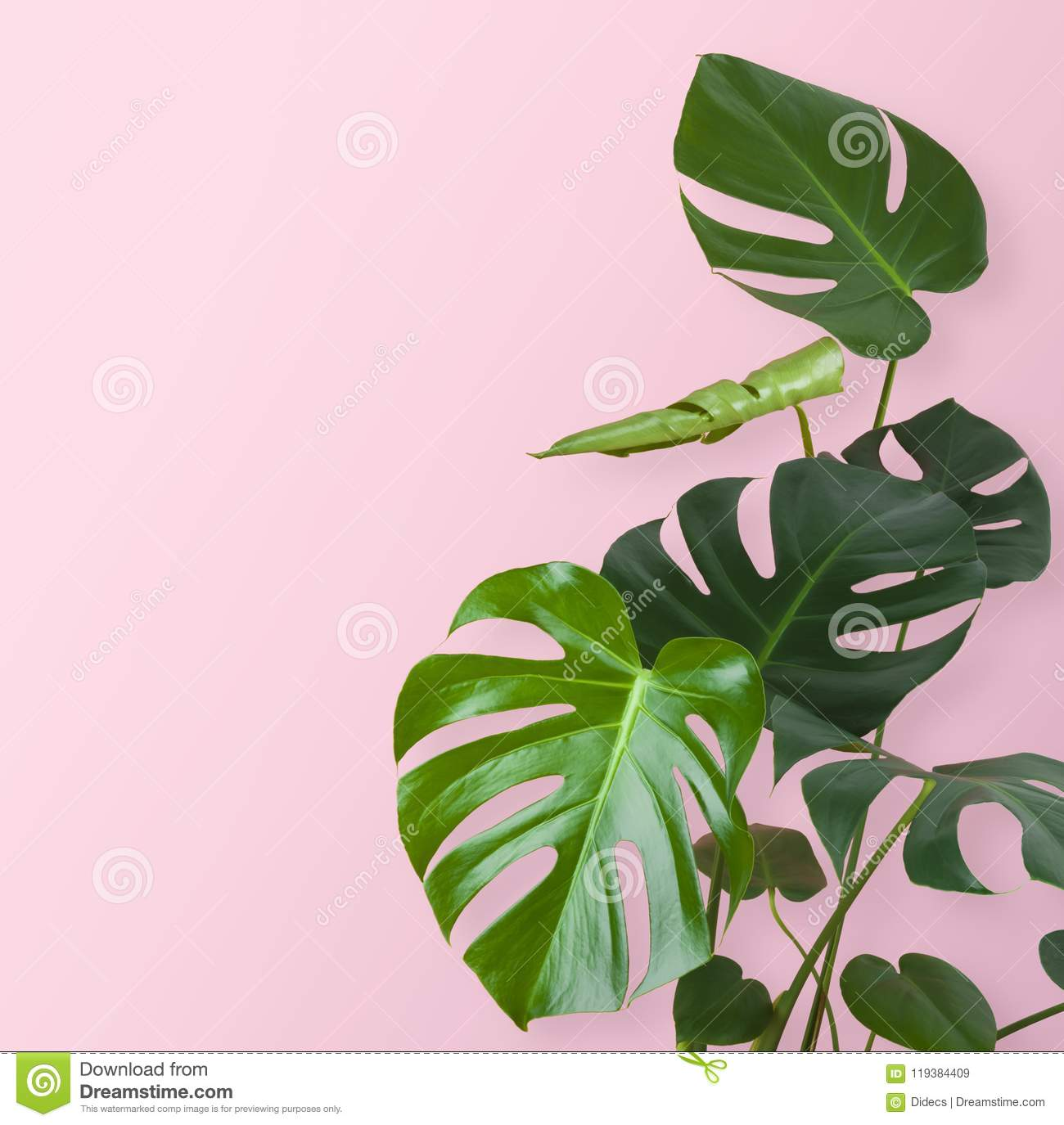 Green tropical plant stem and leaves isolated on pink background