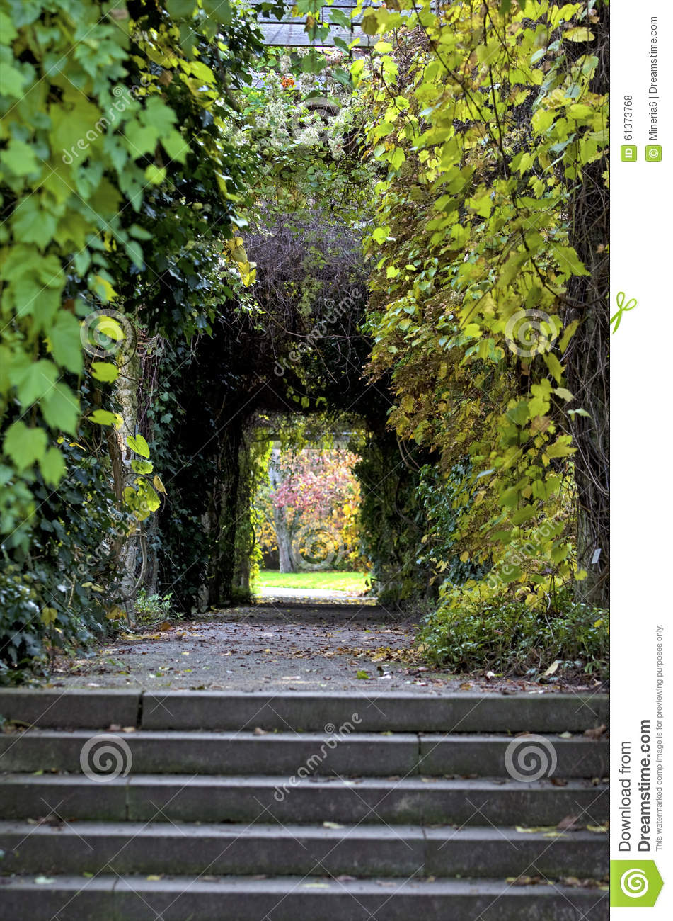 Green Tunnel Stock Photo Image 61373768