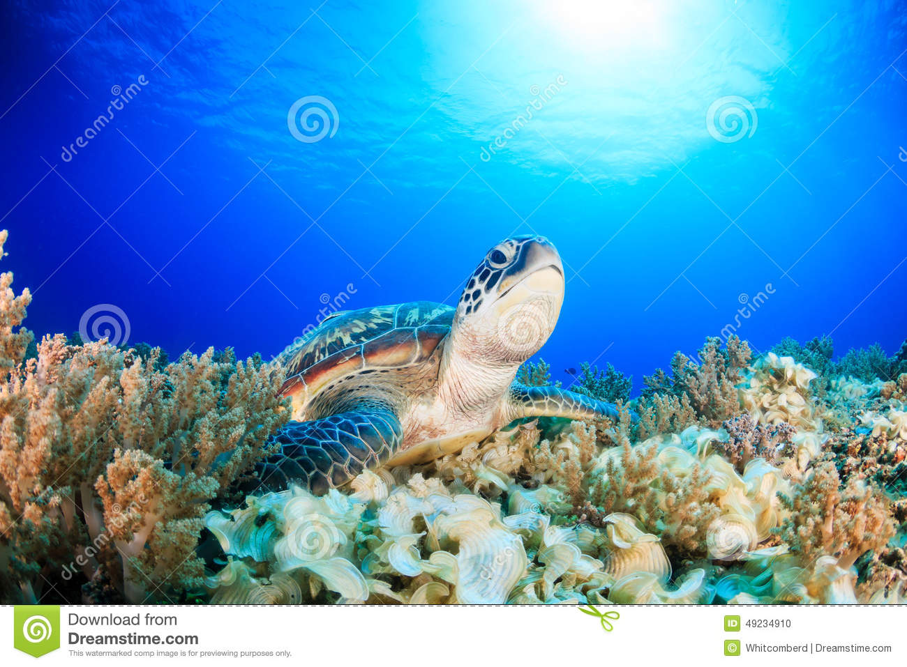 Green Turtle on a dark coral reef