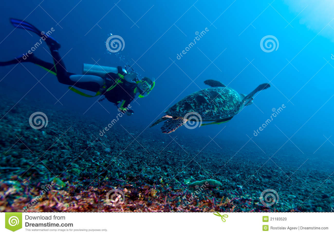 Green turtle and diver, Lombok, Indonesia
