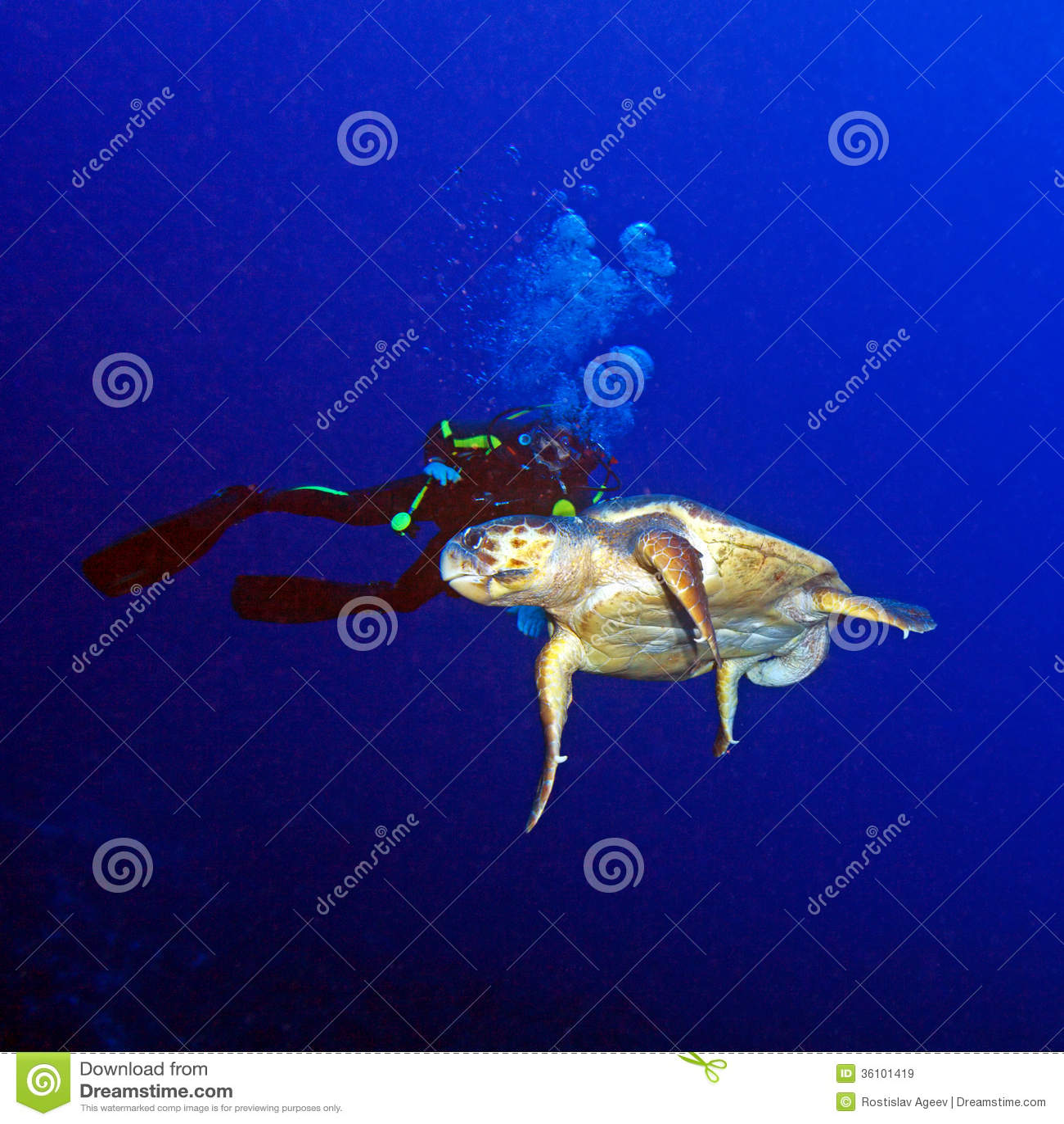 Green Turtle and Scuba Diver