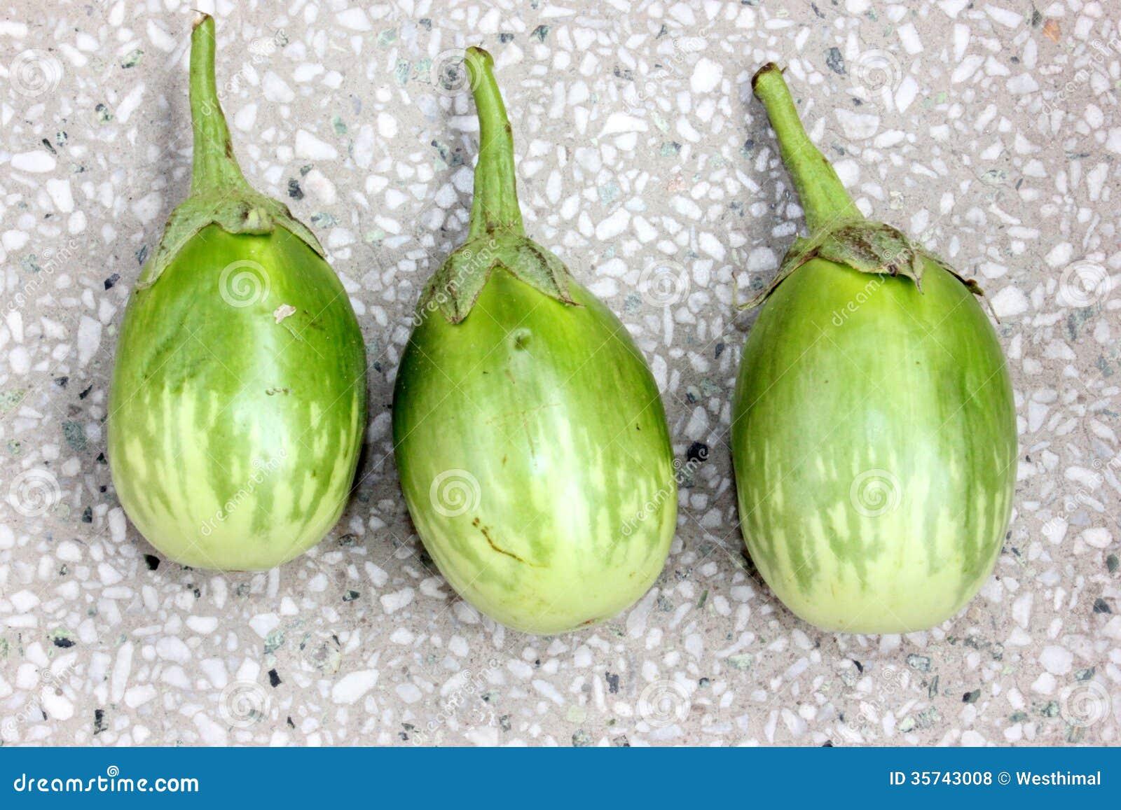 Green brinjal plant