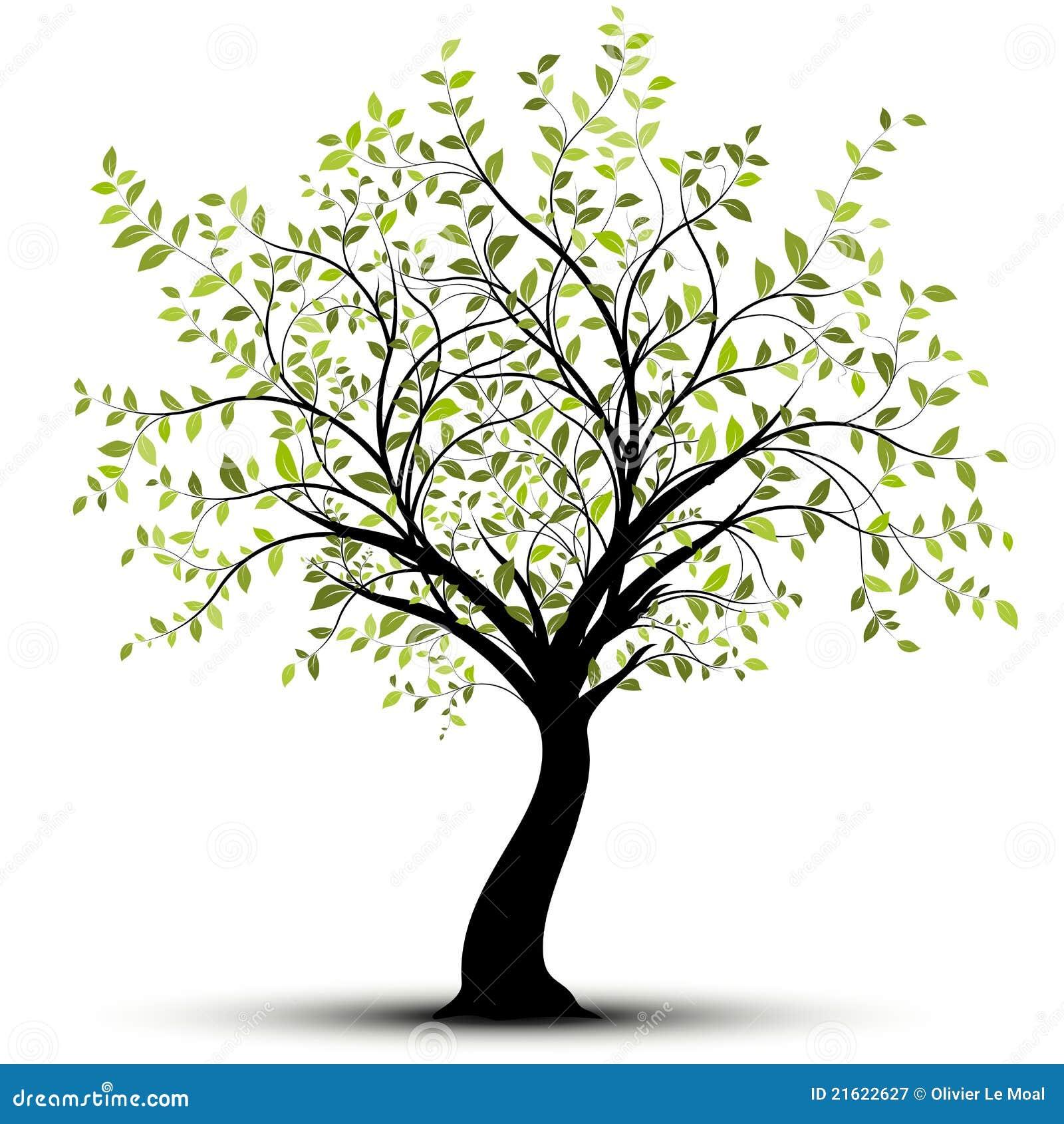1ª RONDA MASTERS SPAINGFX 5º ANIVERSARIO Green-vector-tree-white-background-21622627