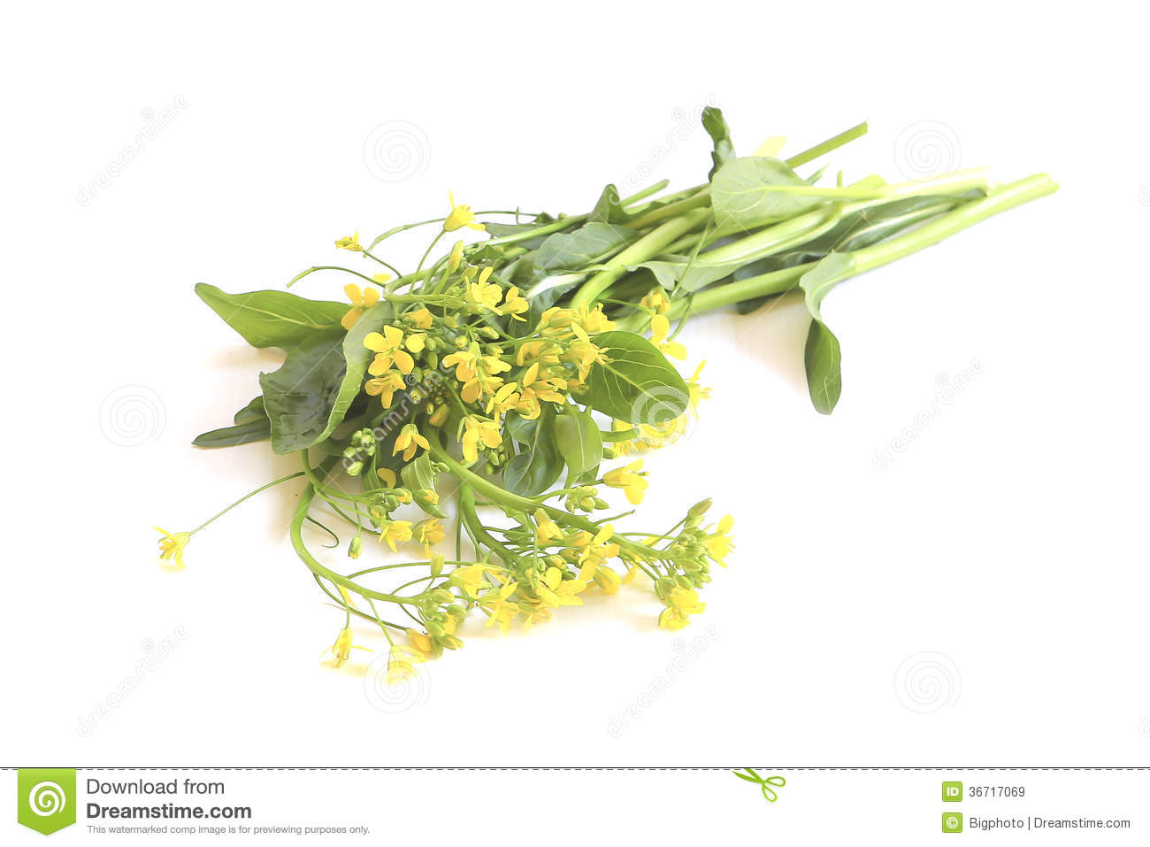 Green vegetables with yellow flowers stock image image of chinese green vegetables with yellow flowers mightylinksfo