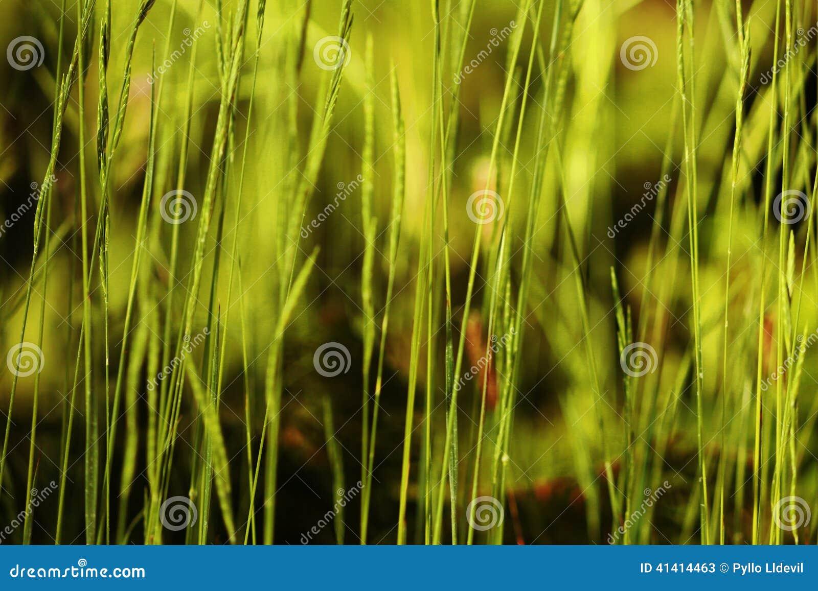 Green vegetation
