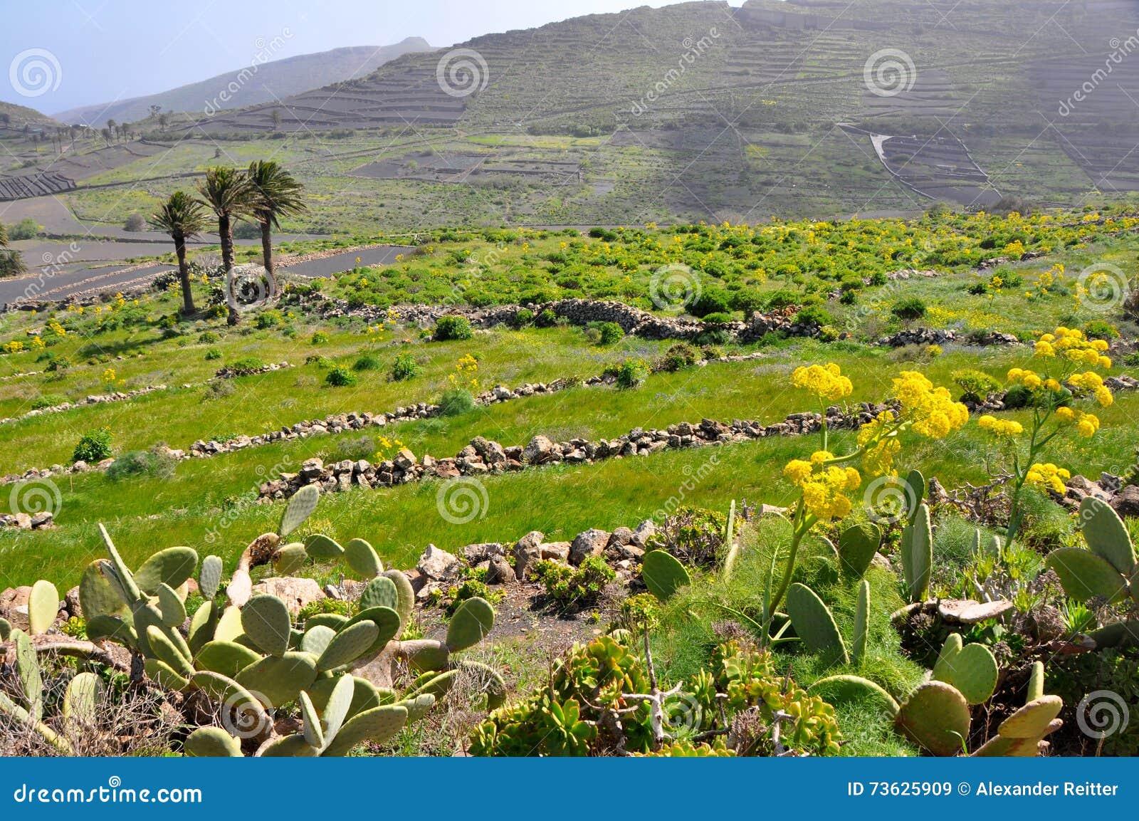 fertile soil volcano - photo #22