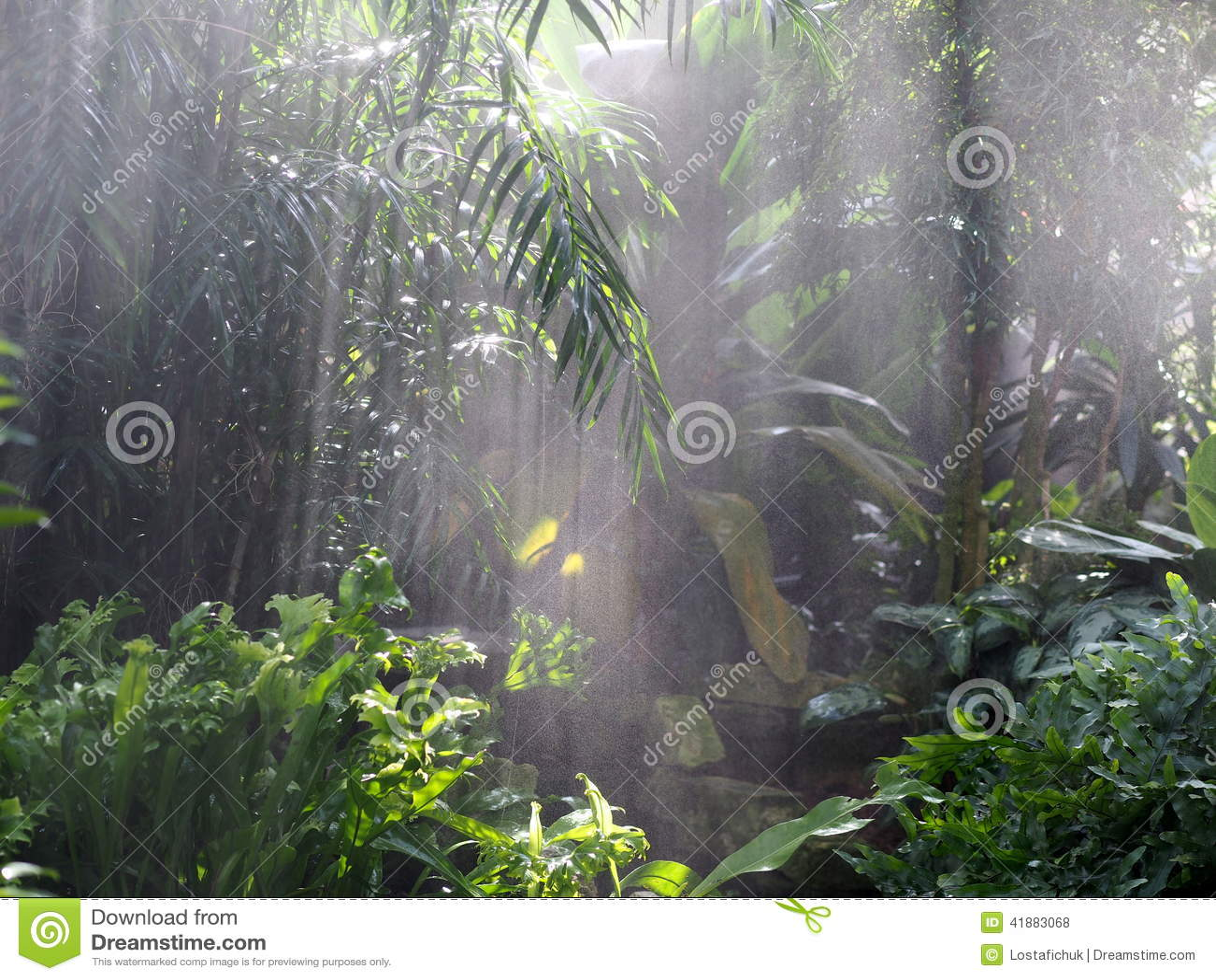 Green Vegetation With Mist