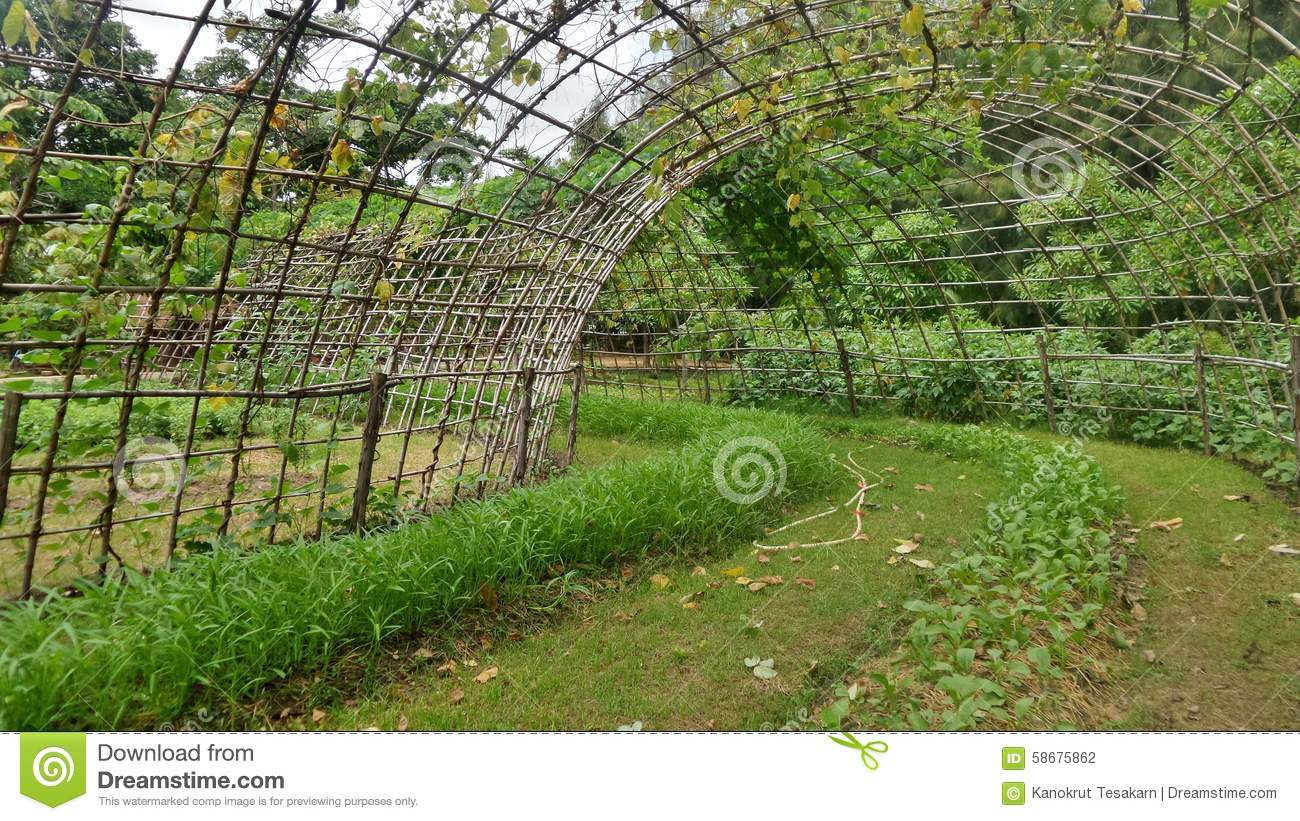 vegetable bamboo tunnel bamboo stock images 56 photos