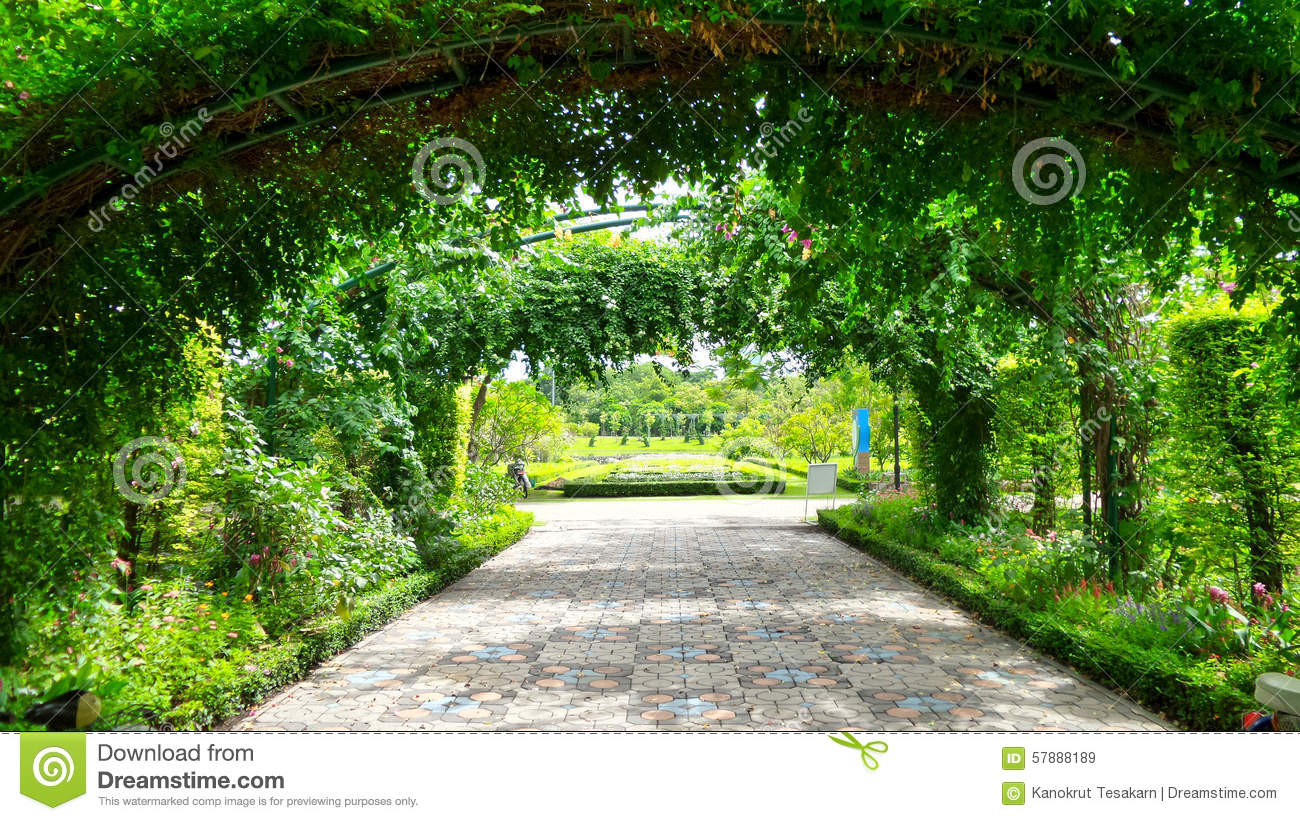 green vine tunnel to flower garden stock photo image 57888189