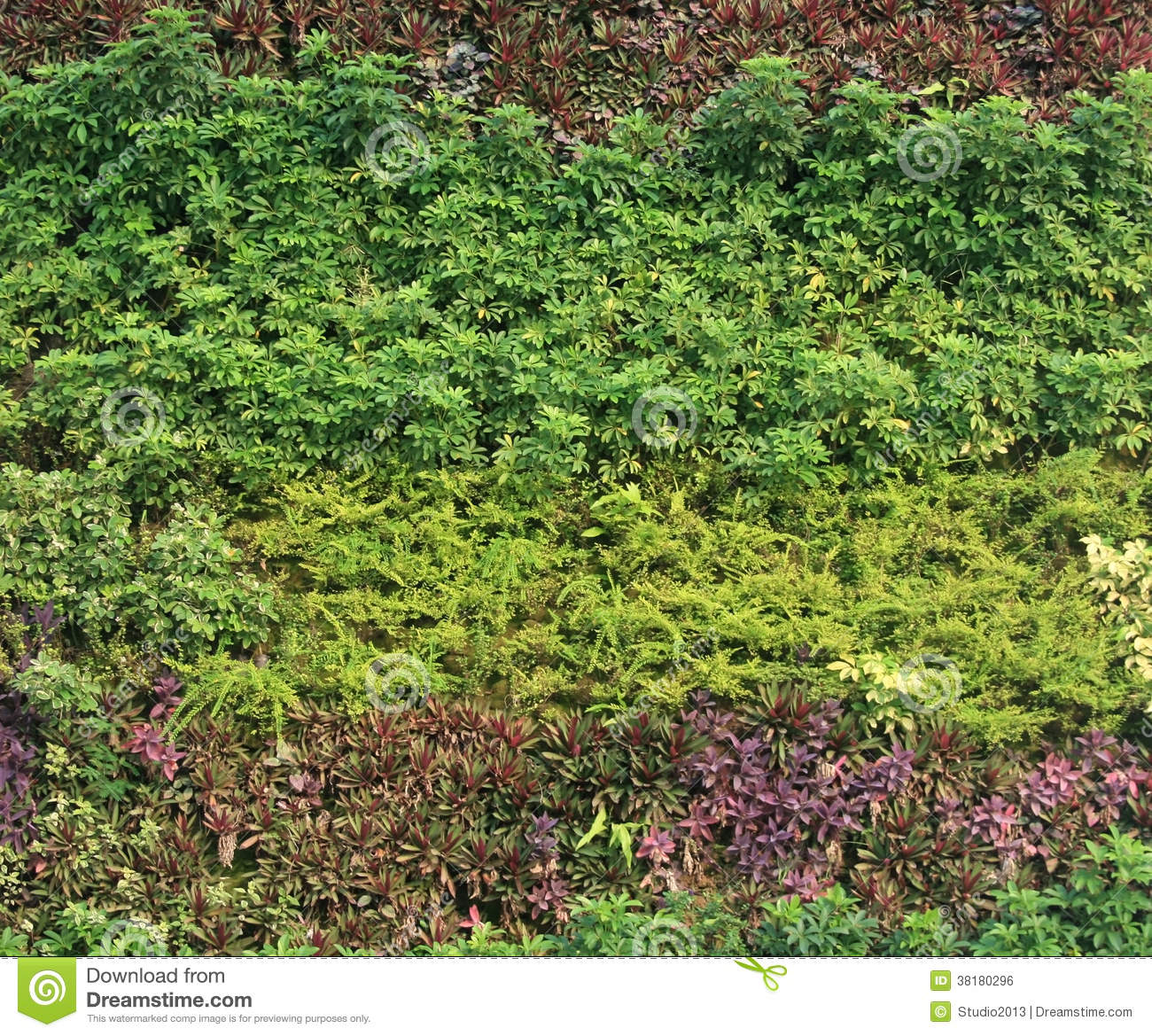 Green Wall Vertical Garden Royalty Free Stock Image ...