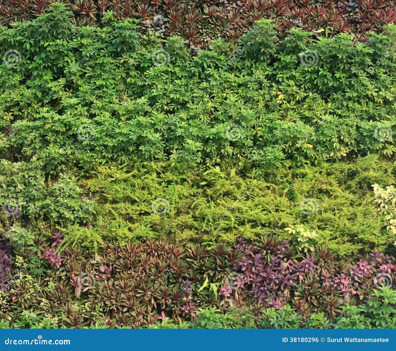 Onion Wallpaper Hd: Green Wall Vertical Garden Stock Photo. Image Of