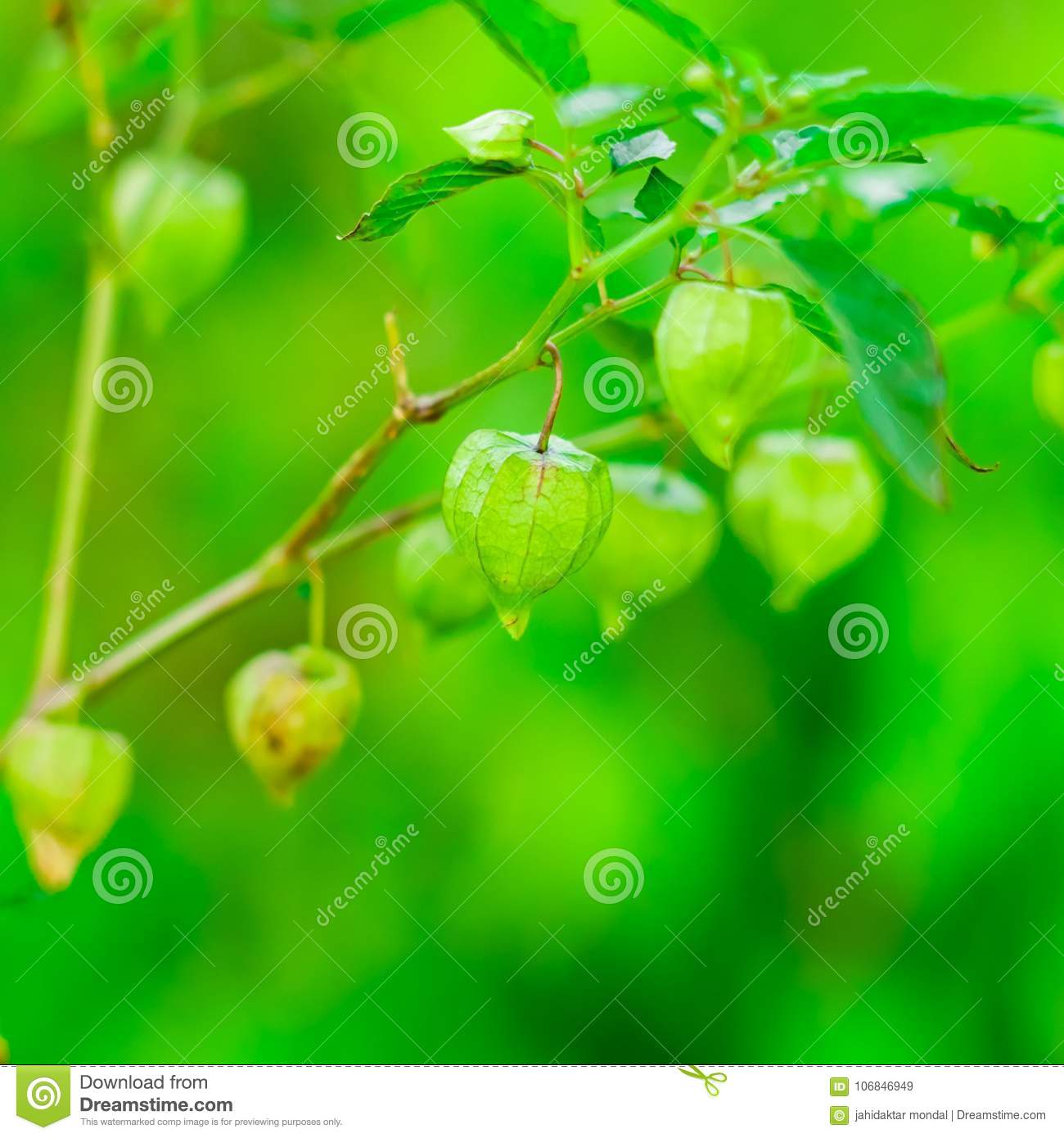 Very Nice Wallpaper Color Background Stock Image Image Of