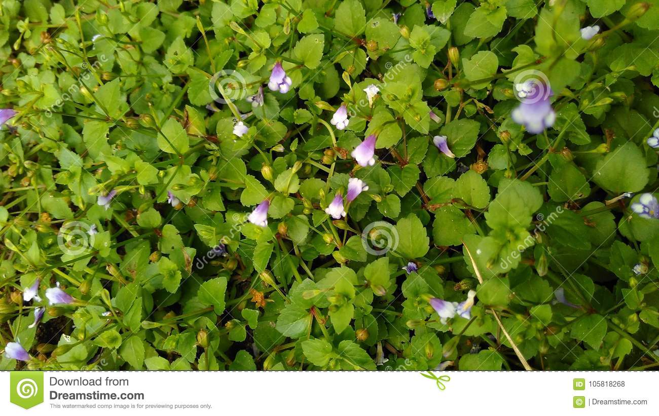 Green Weeds Background With Purple Flowers Stock Photo Image Of