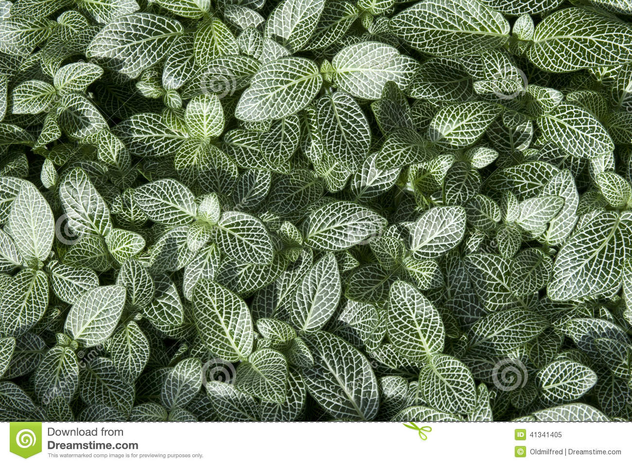 Green and White Leaf Background