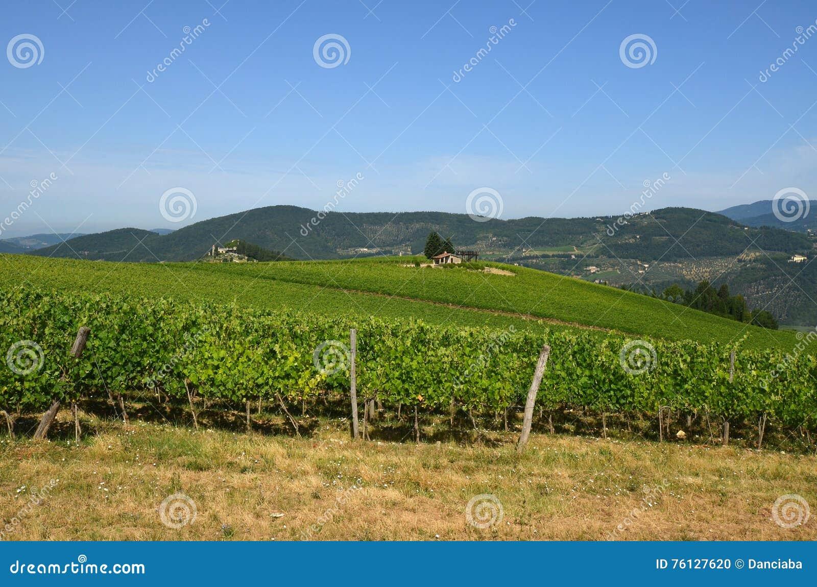 Green Wineyards in Tuscany, Chianti, Italy