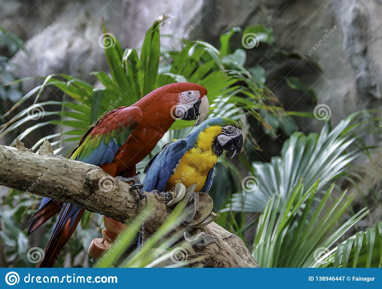 Green-winged Macaw, Blue and Gold Macaw sitting on a branch