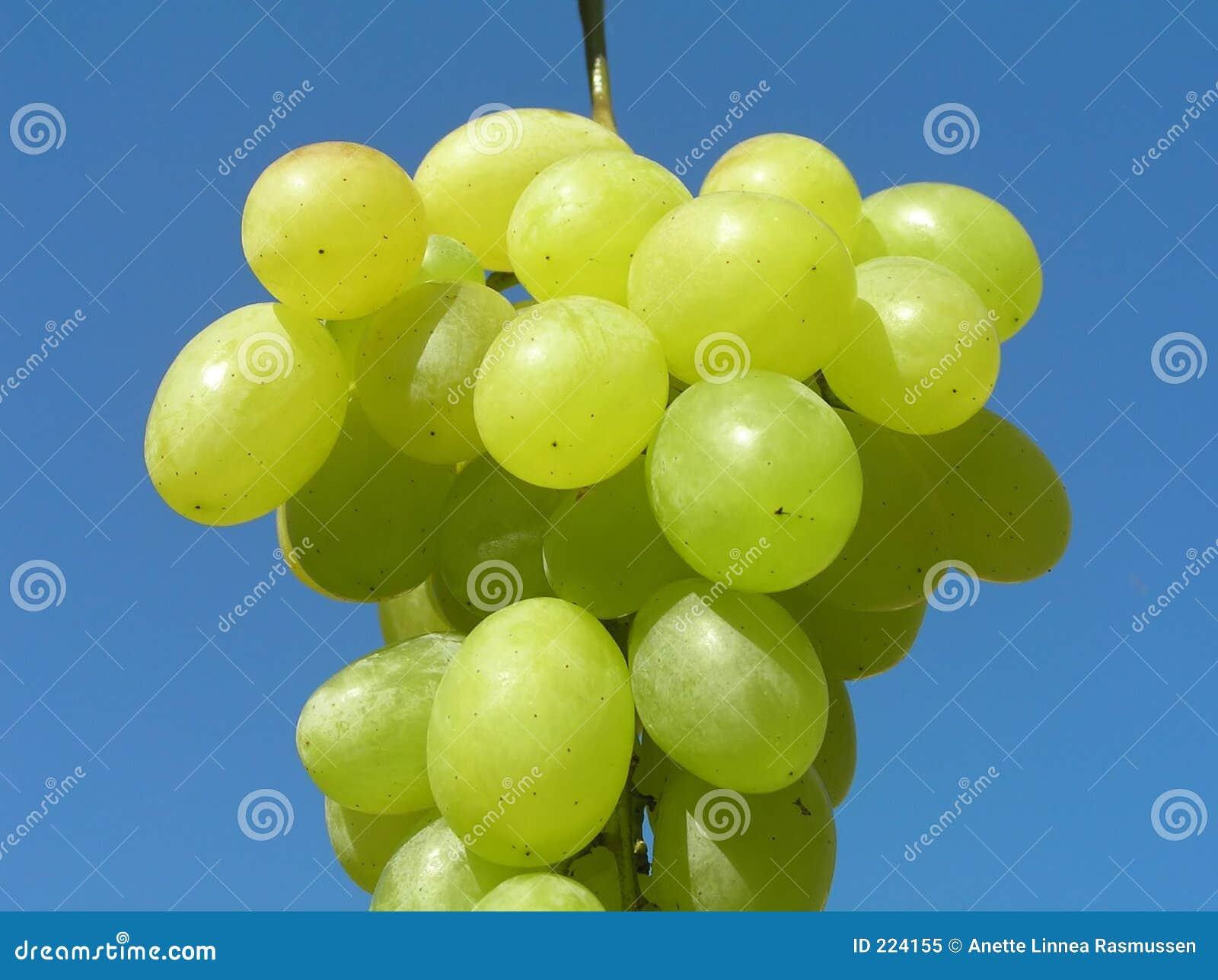 Green winogron
