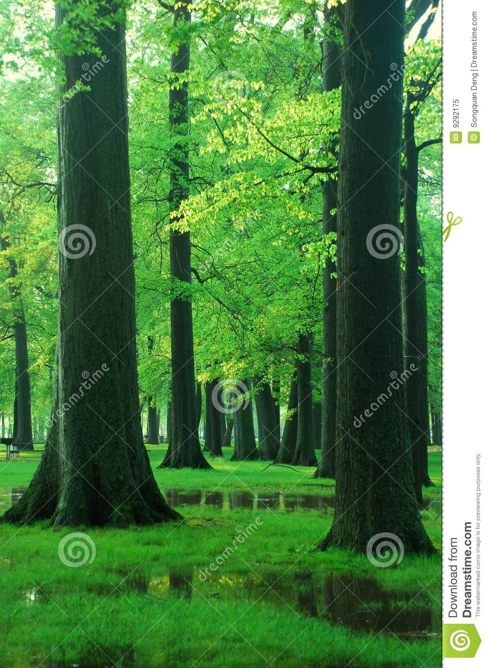 Green Woods stock image. Image of leisure, forest, hope ...