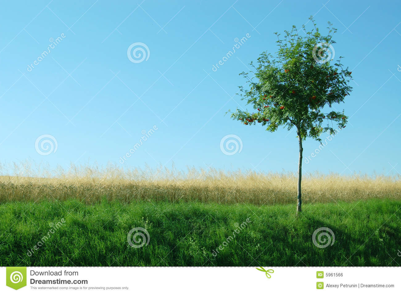 Green, Yellow Grass, Tree, The Blue Sky Royalty Free Stock ...