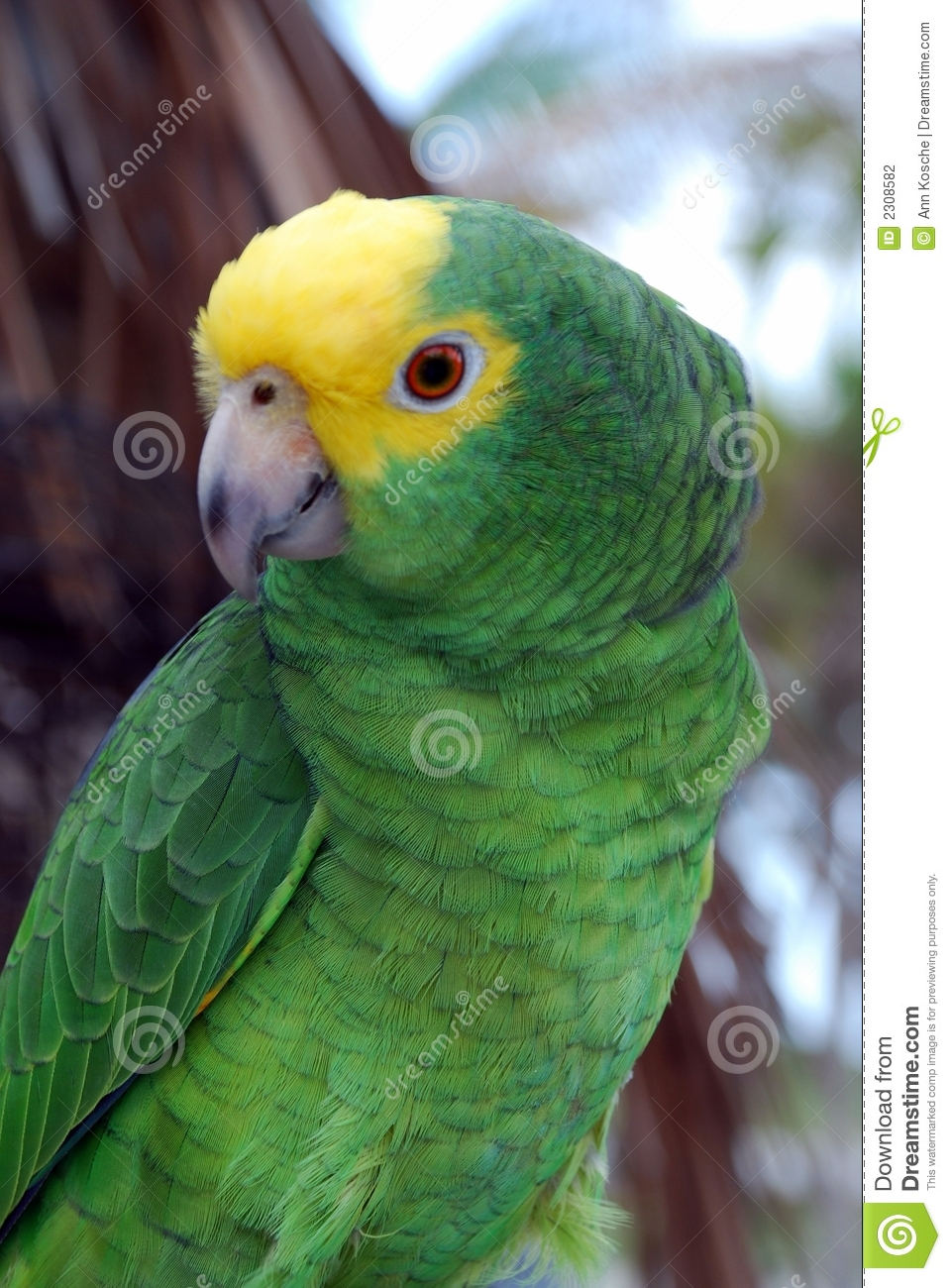 yellow and green parrots